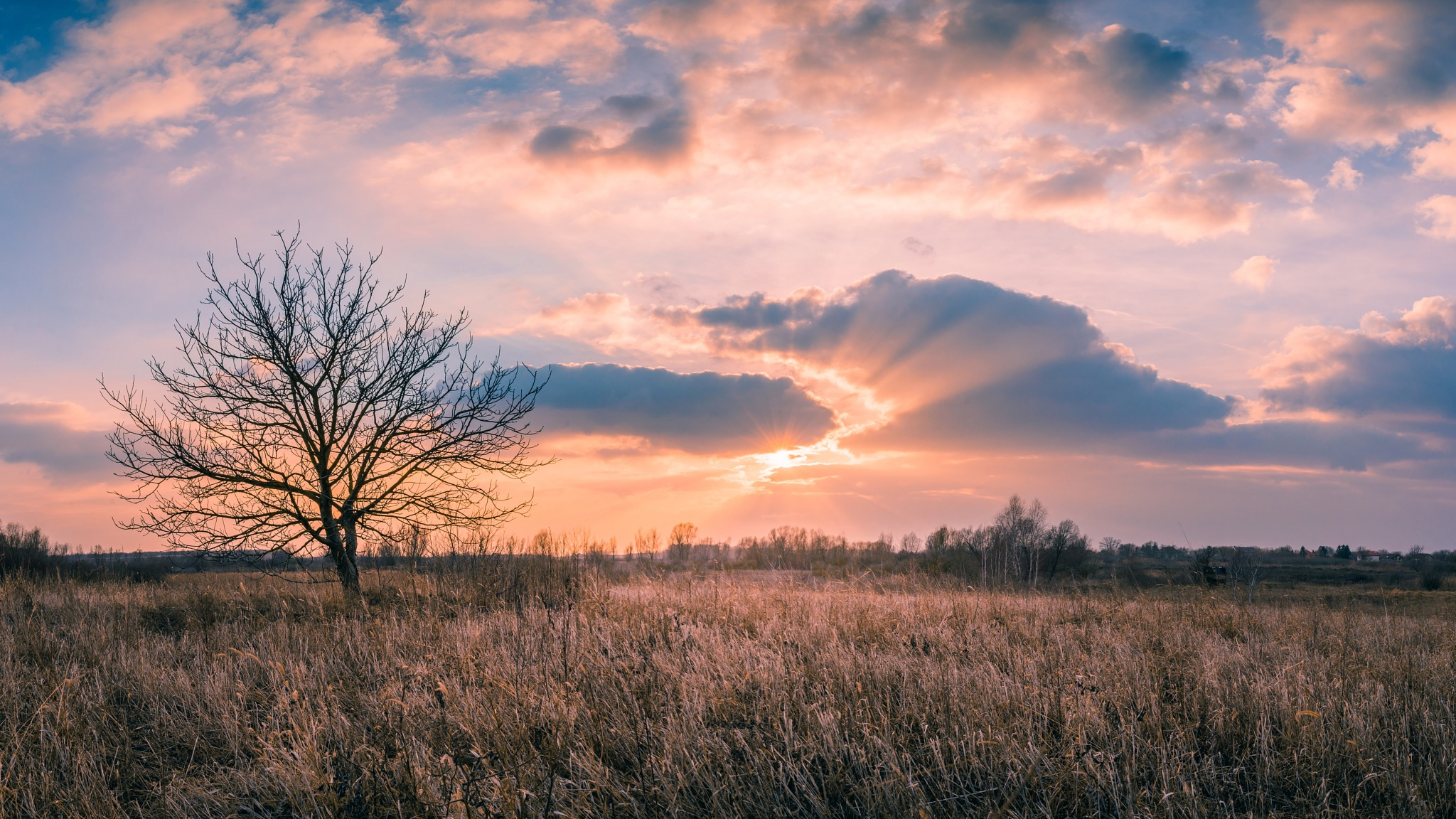 Photo in Landscape #sunset #suzn #tree #field #colors #winter #dry #clouds