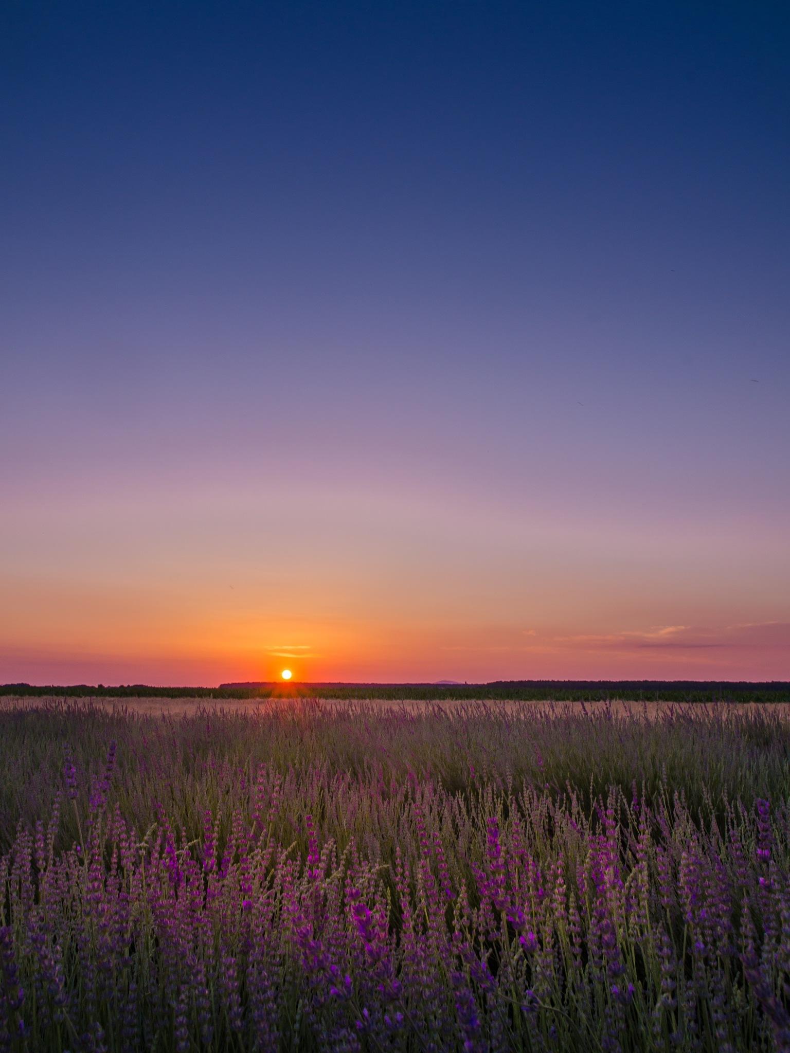 Suinset in fields by Nenad Milic