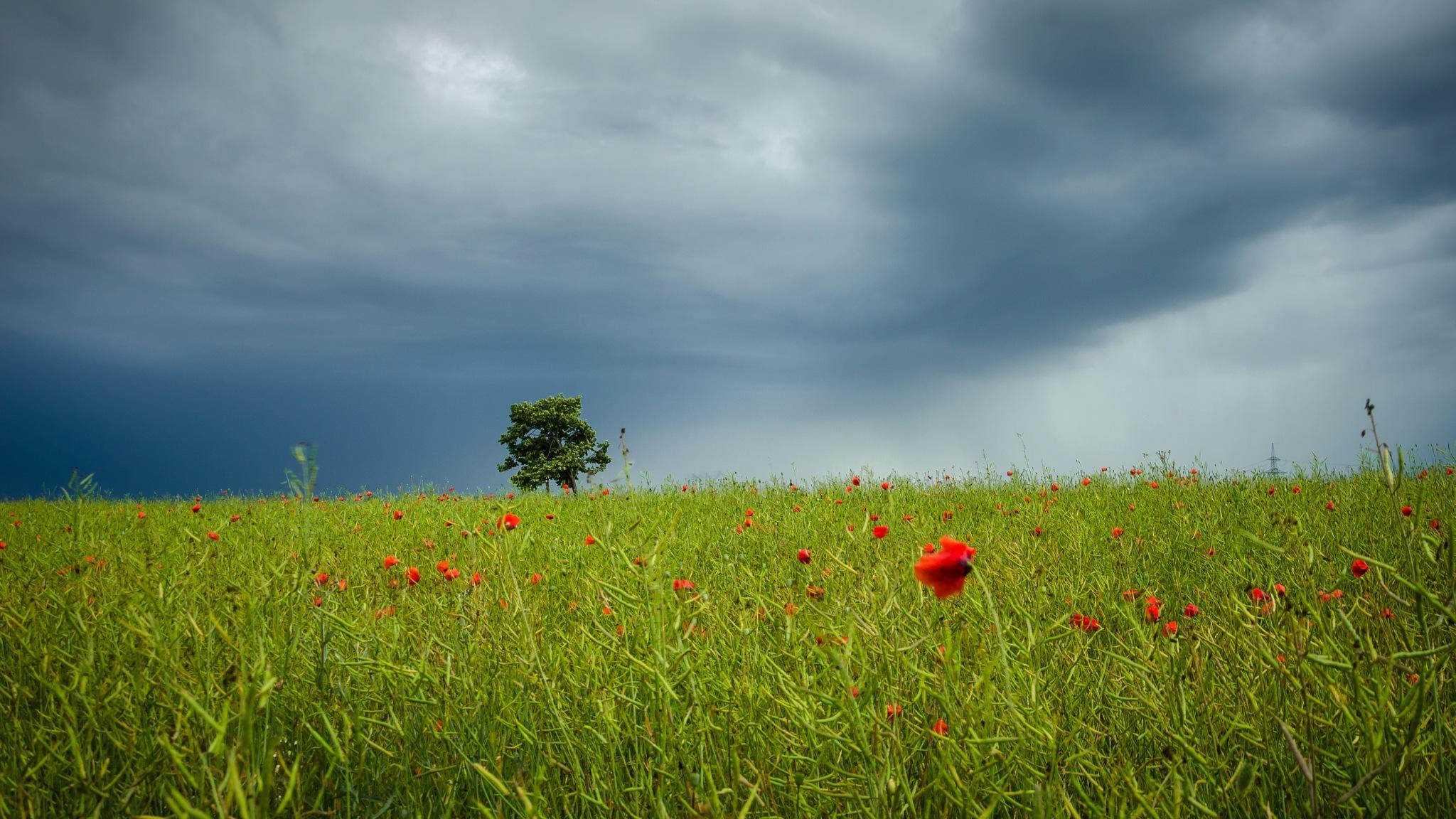 Stormy Wednesday by Nenad Milic
