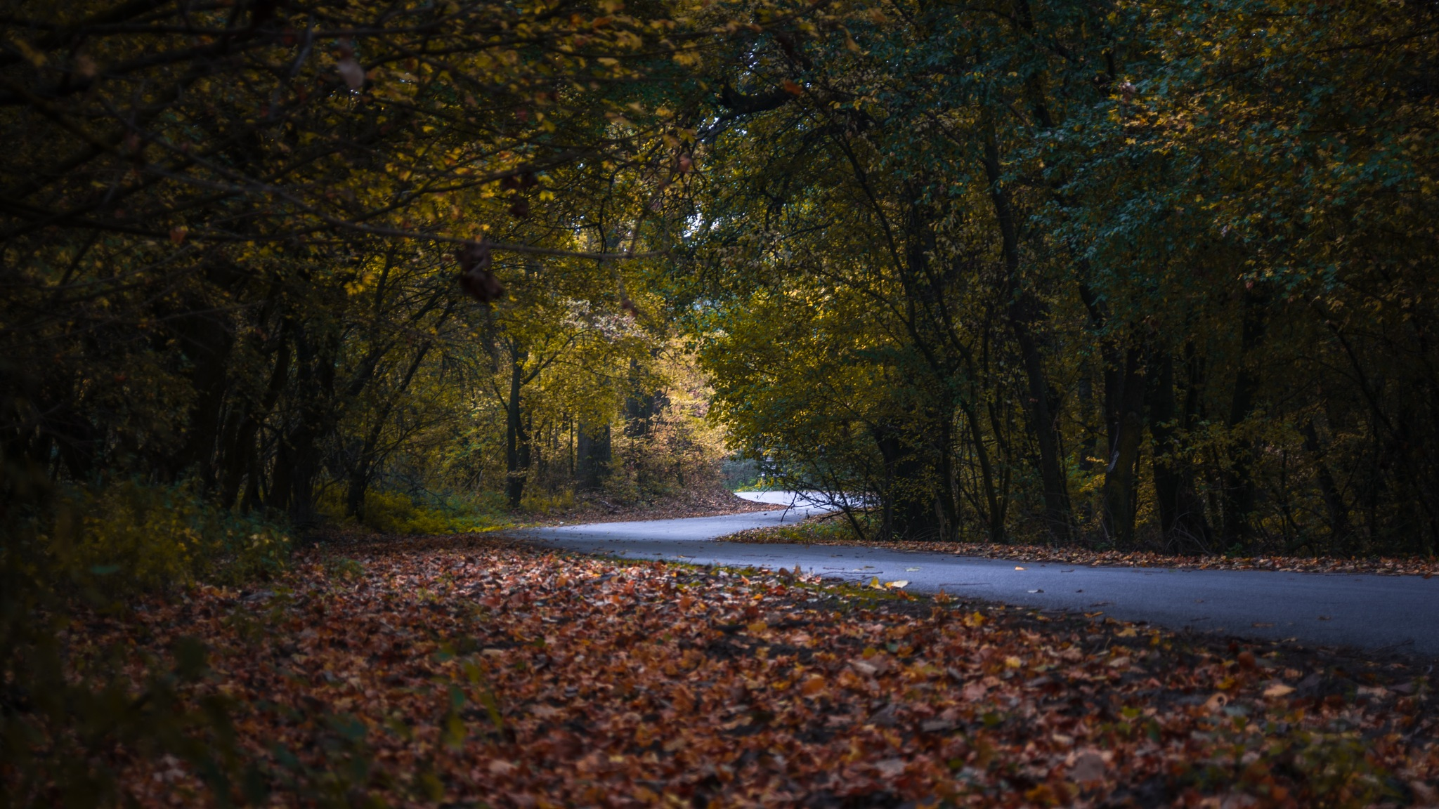 Road by Nenad Milic