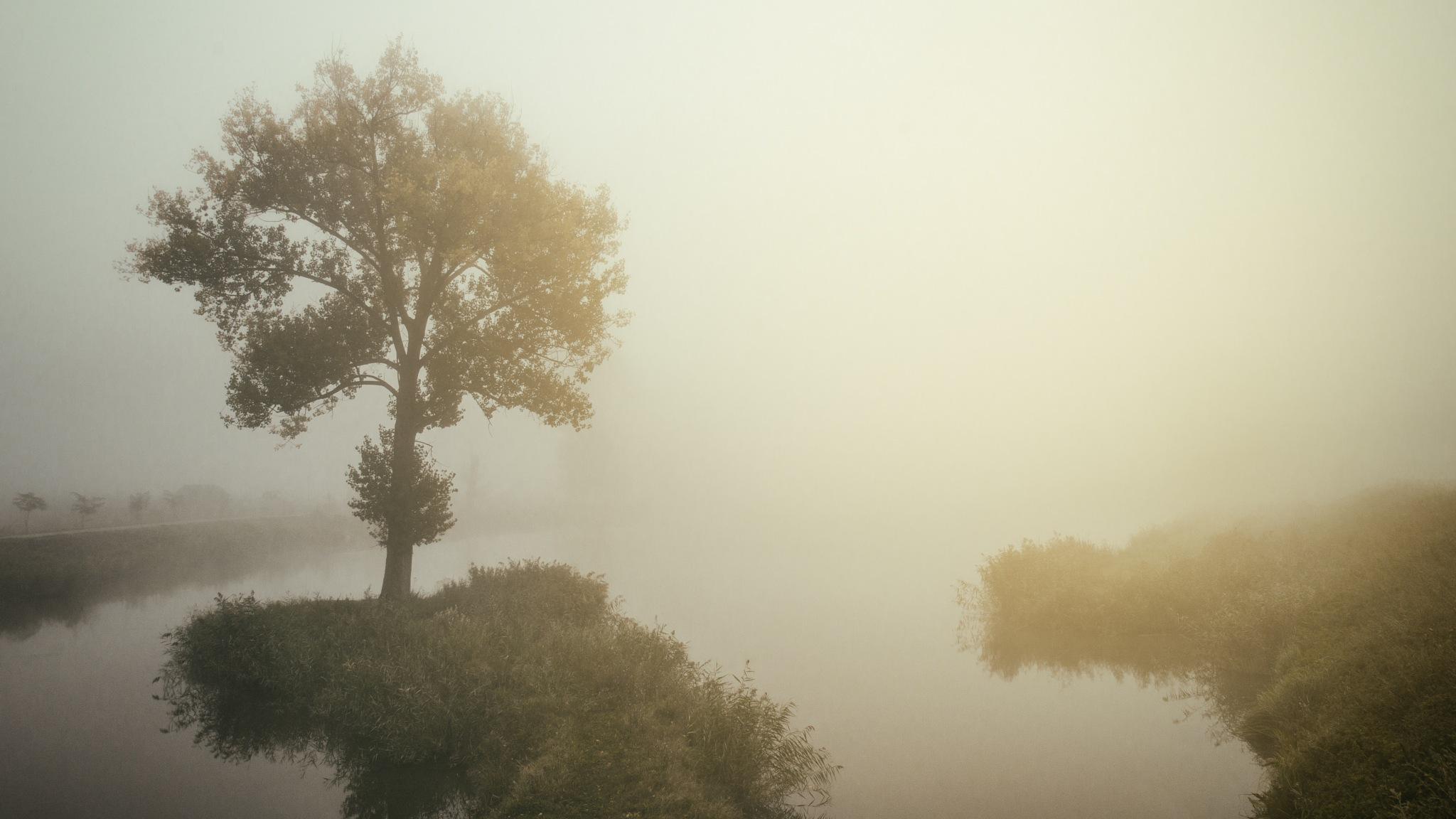 Fog on lake by Nenad Milic