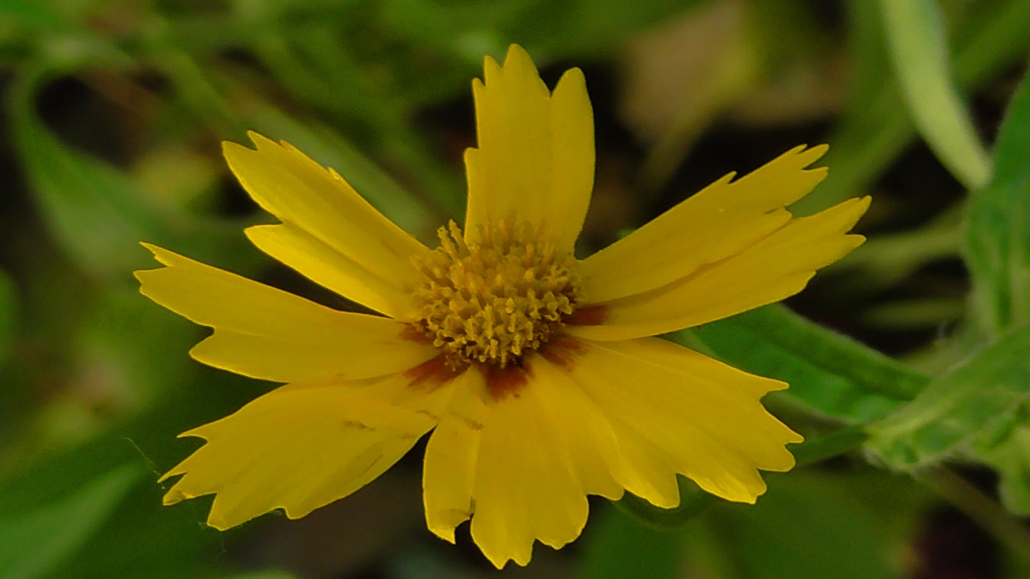 Yellow flower by evakalocsay