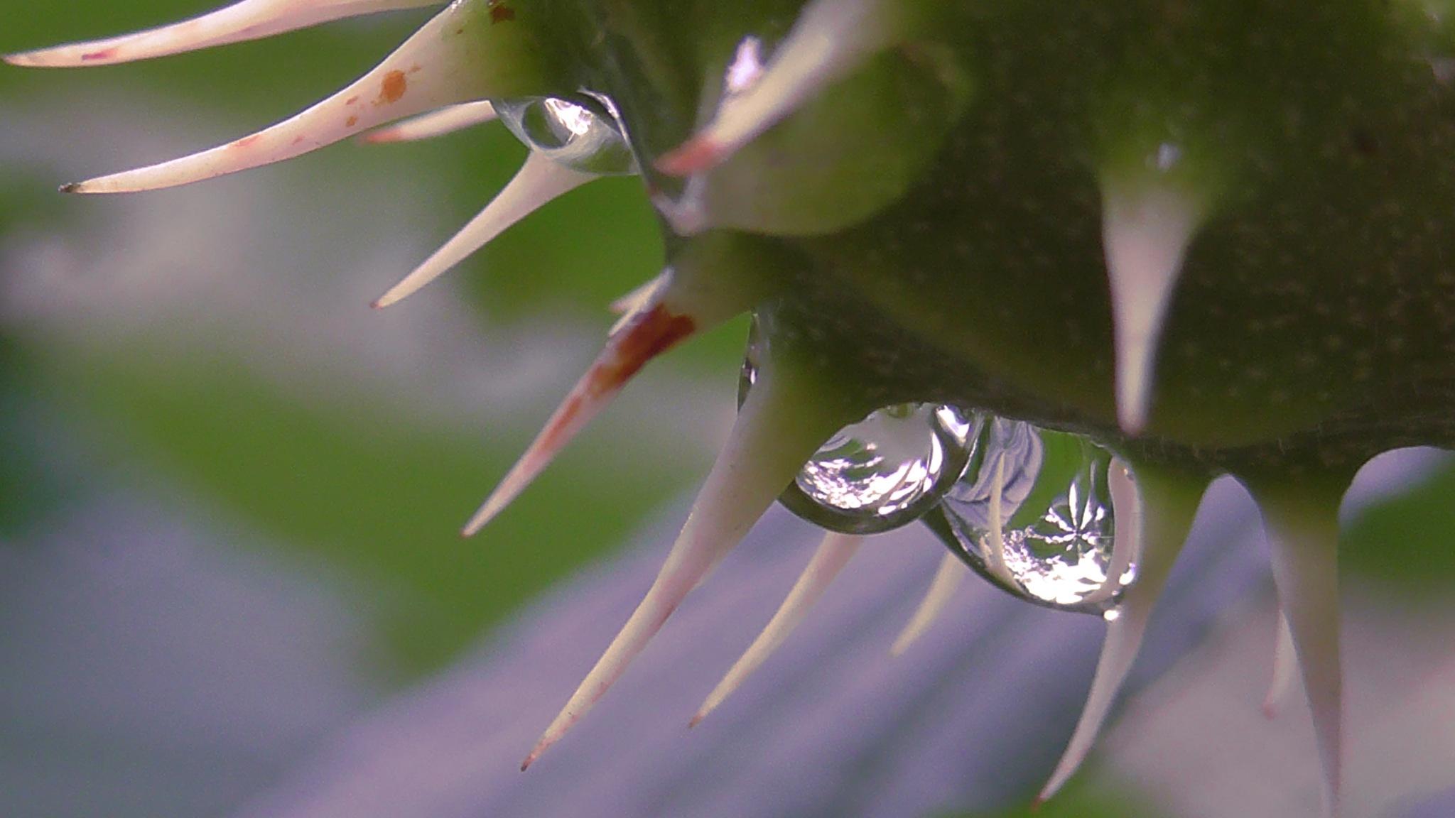 drops by evakalocsay