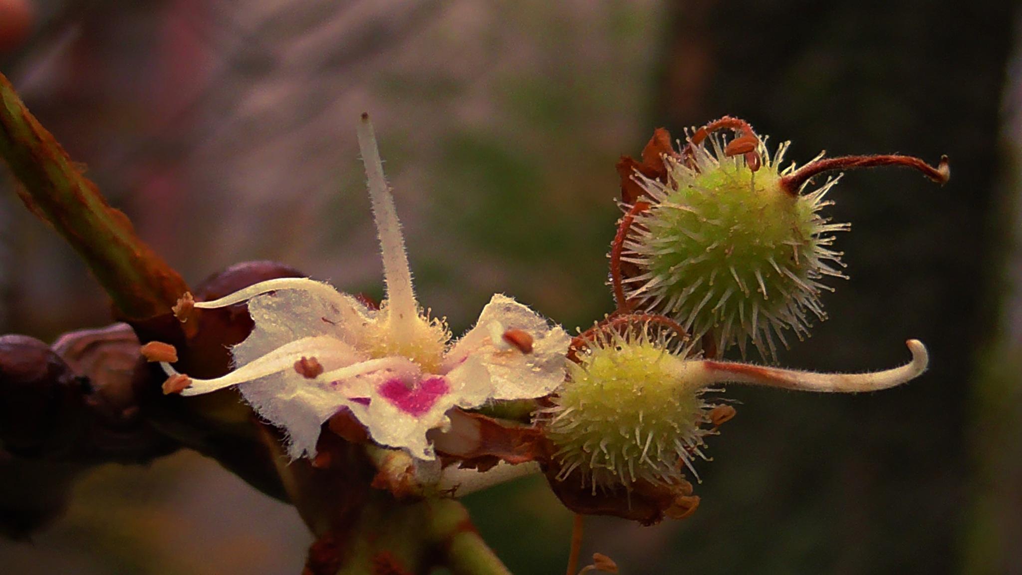 Autumn bloom by evakalocsay
