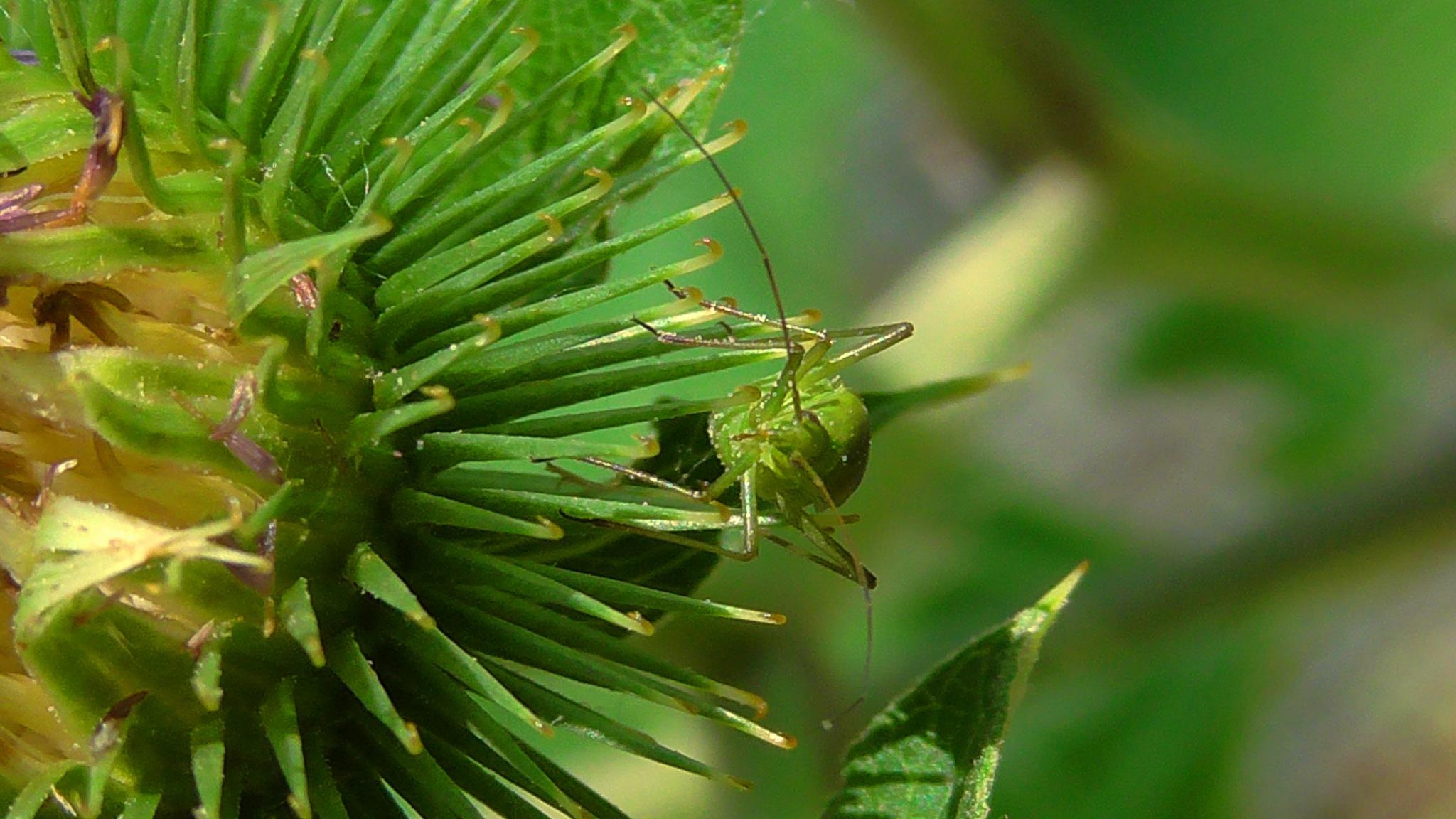 Green beetle by evakalocsay