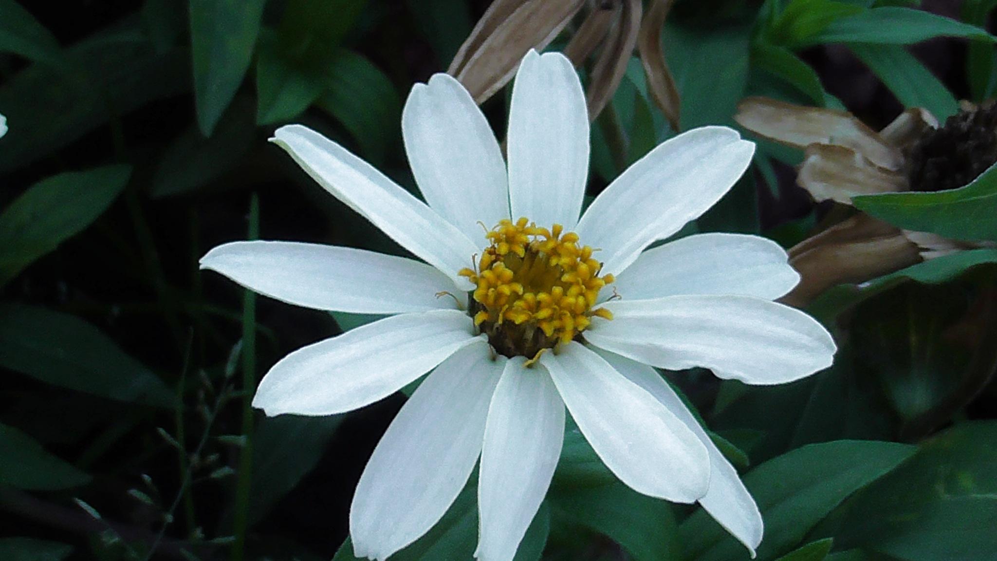 white flower by evakalocsay