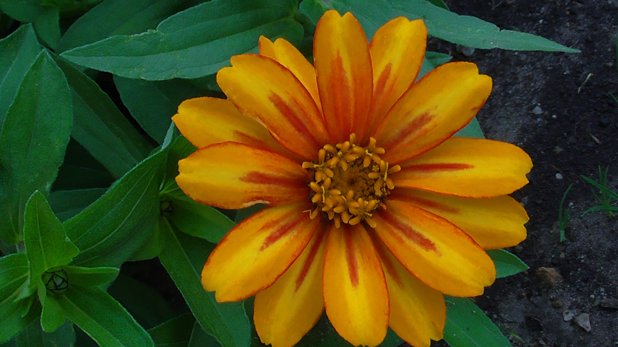 orange yellow flower by evakalocsay