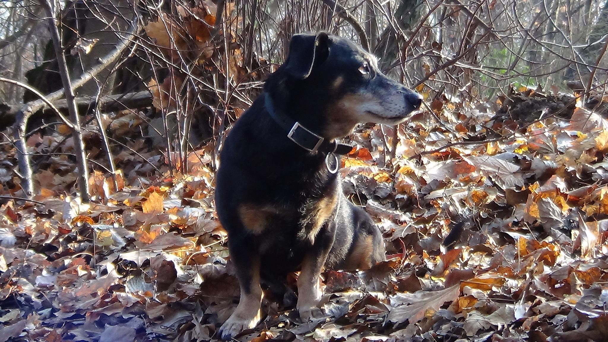 My dog is lili by evakalocsay