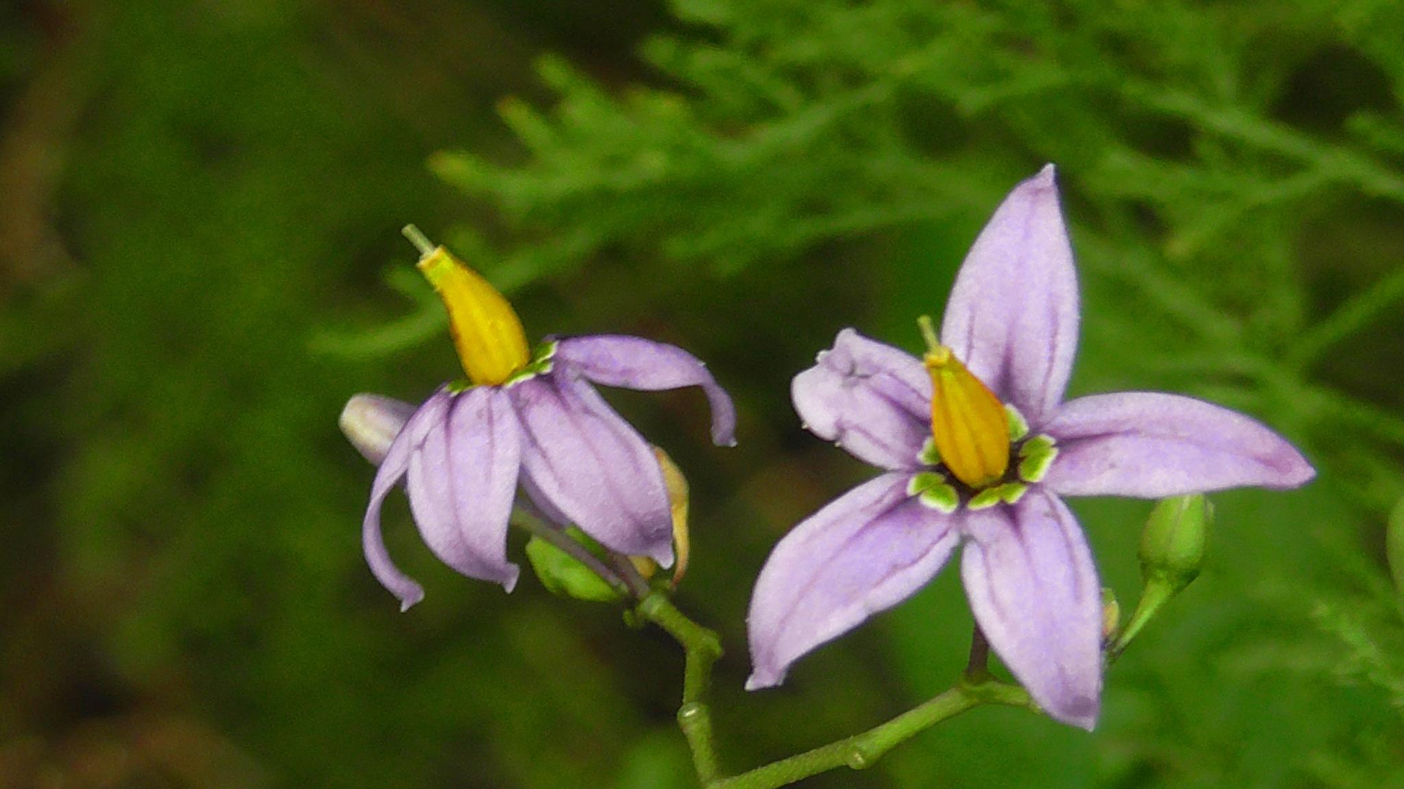 Tiny purple flowers by evakalocsay