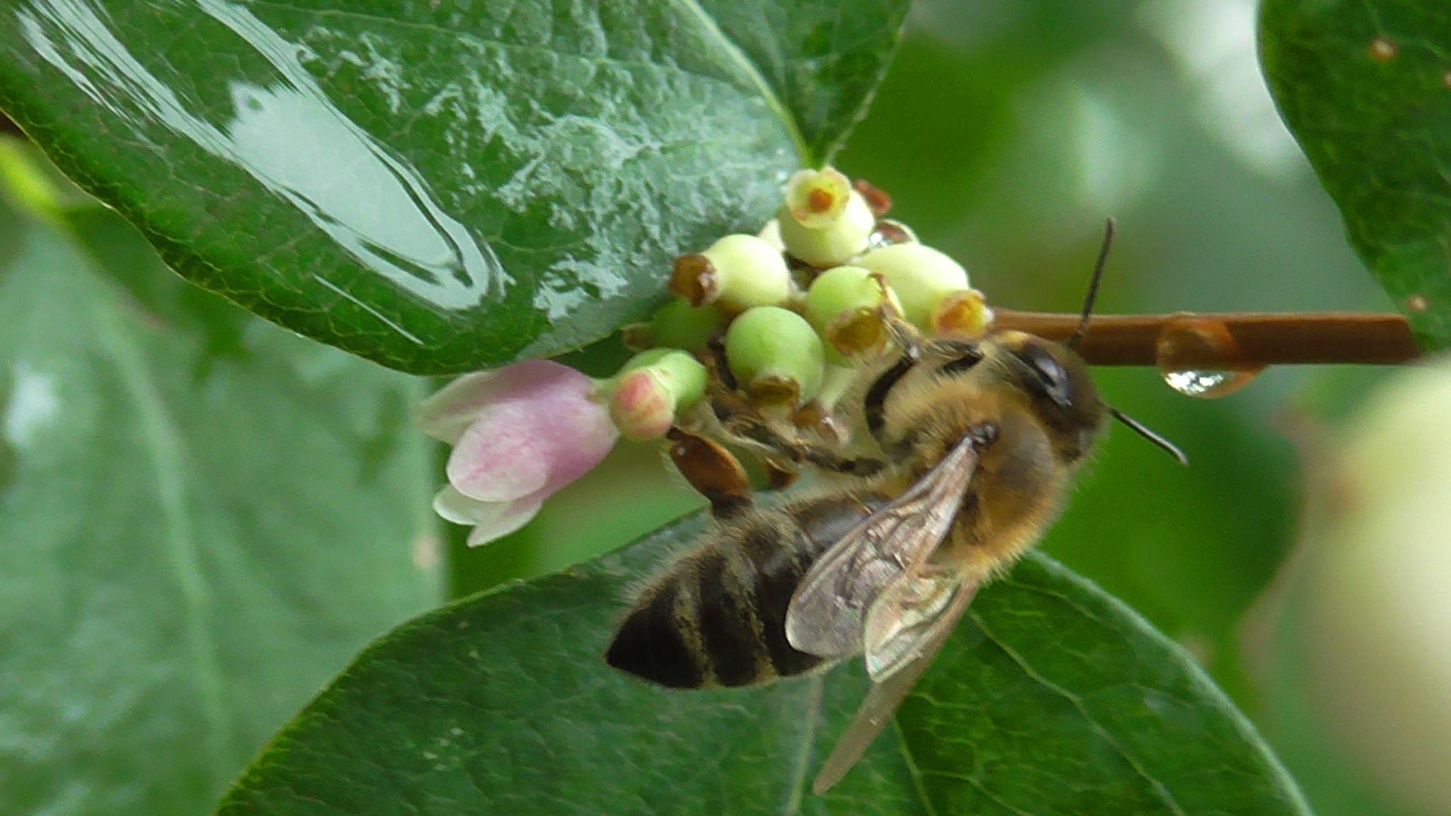 bee by evakalocsay