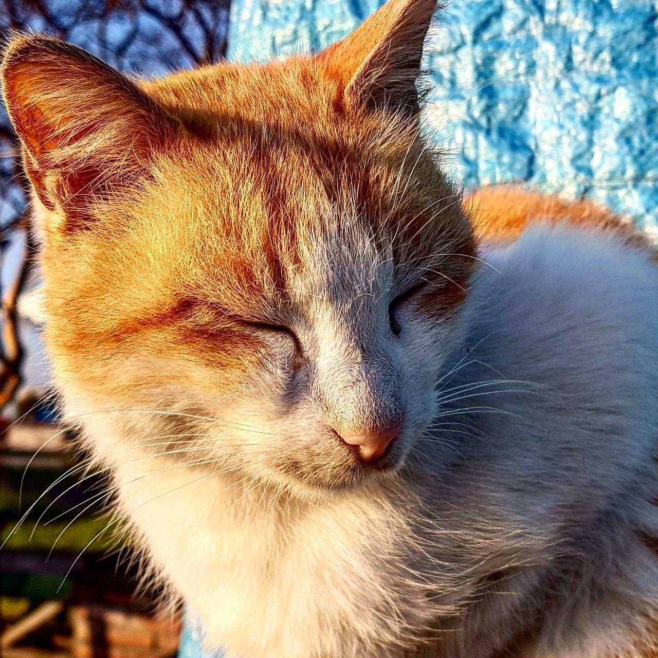 Cat by taherikambiz