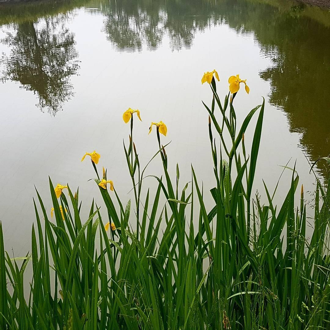 Lake by taherikambiz