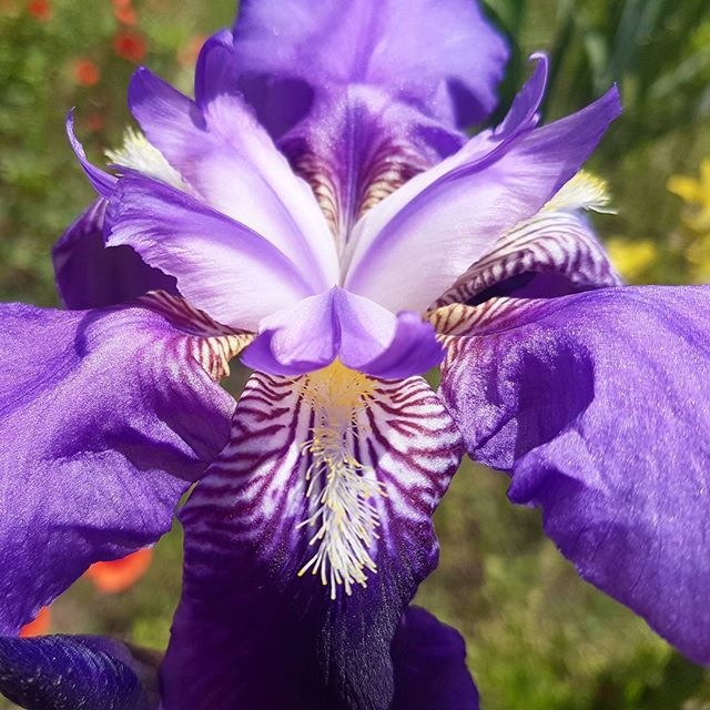 Flower by taherikambiz
