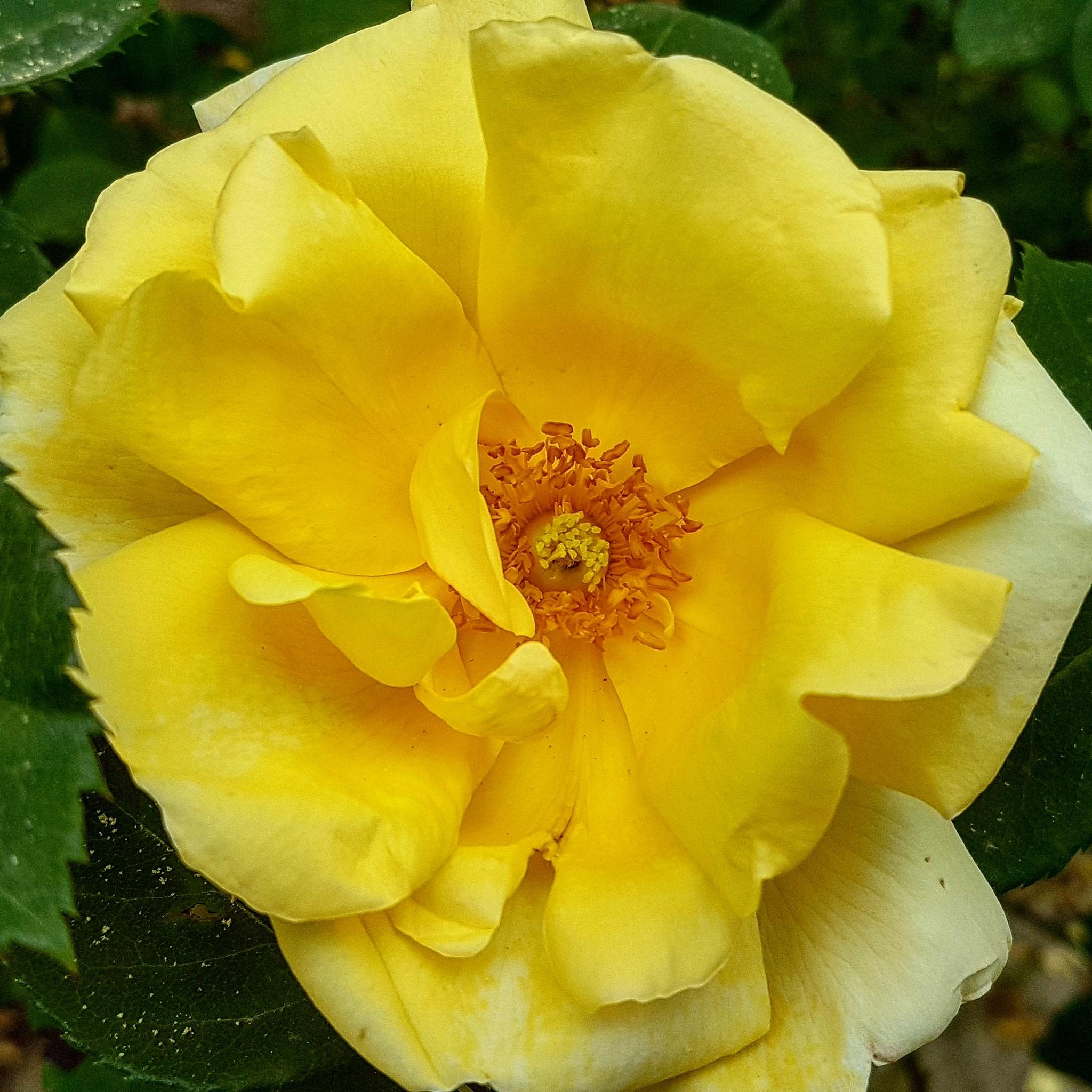 Rose garden by taherikambiz