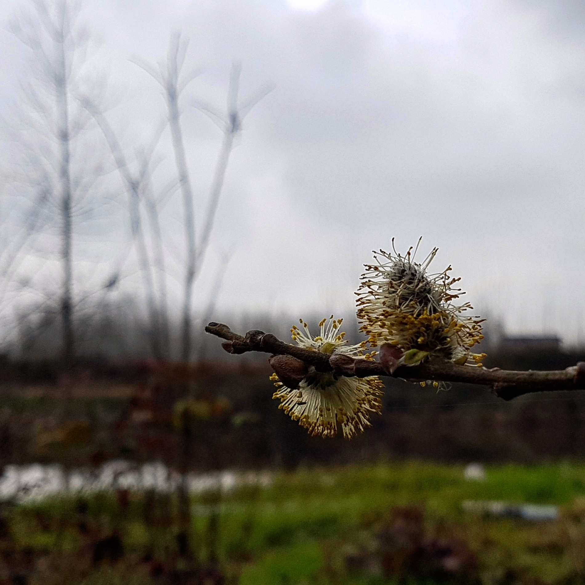 Spring by taherikambiz
