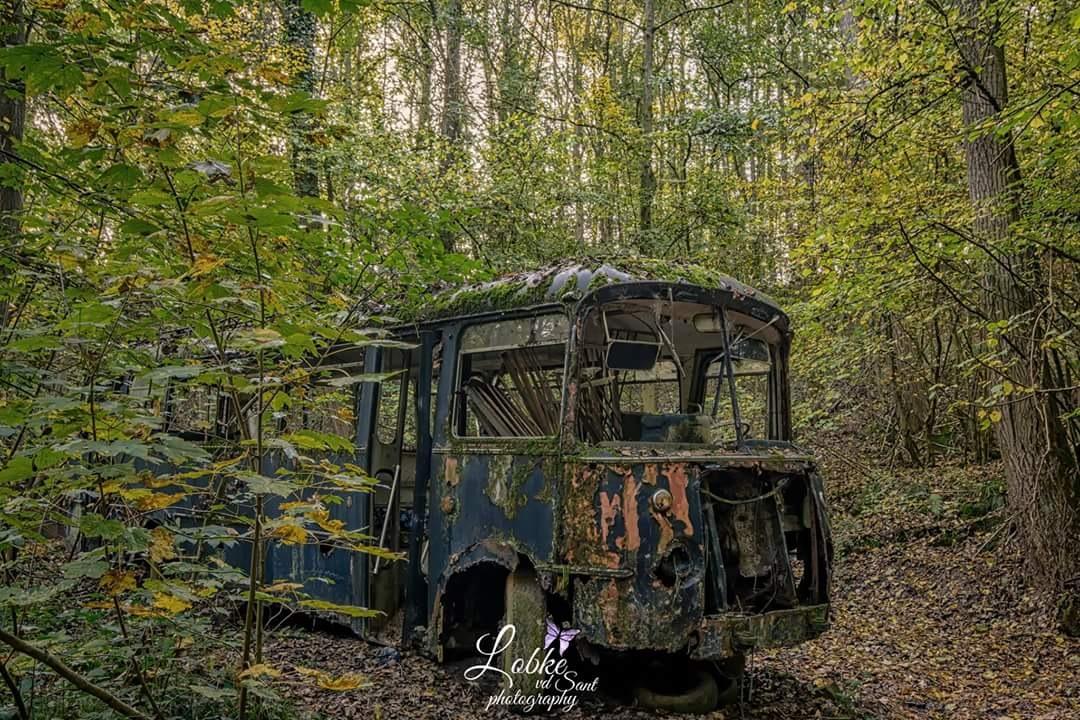 lost in the woods by Lobke Van de Sant