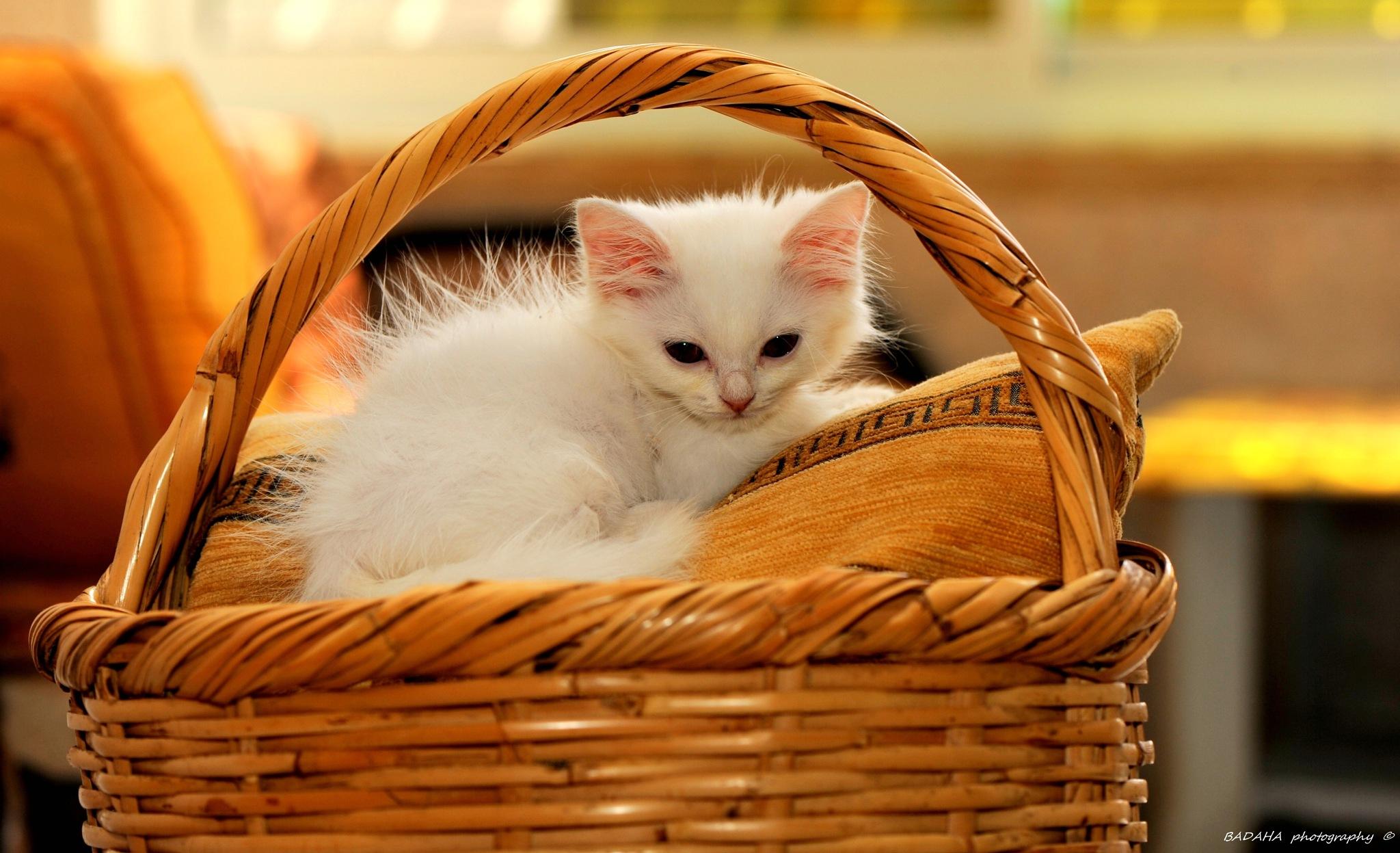 my cat..! by Mohammad Badaha
