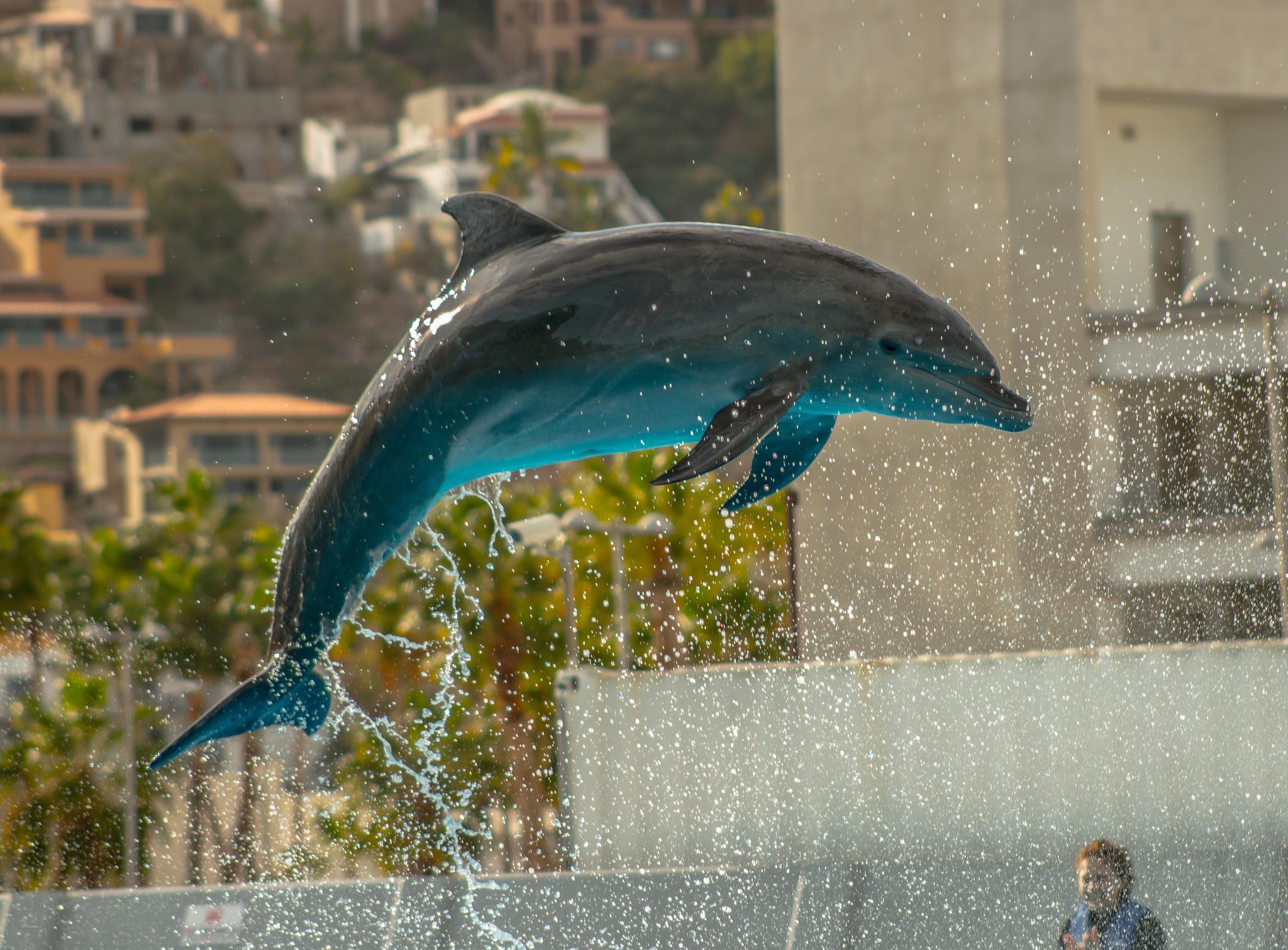 Dolphin by JD3Studios l Joseph DeFalco III