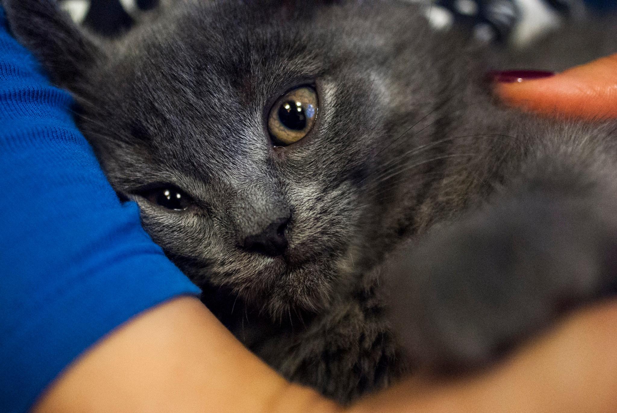 Sleepy kitten by David Jenne