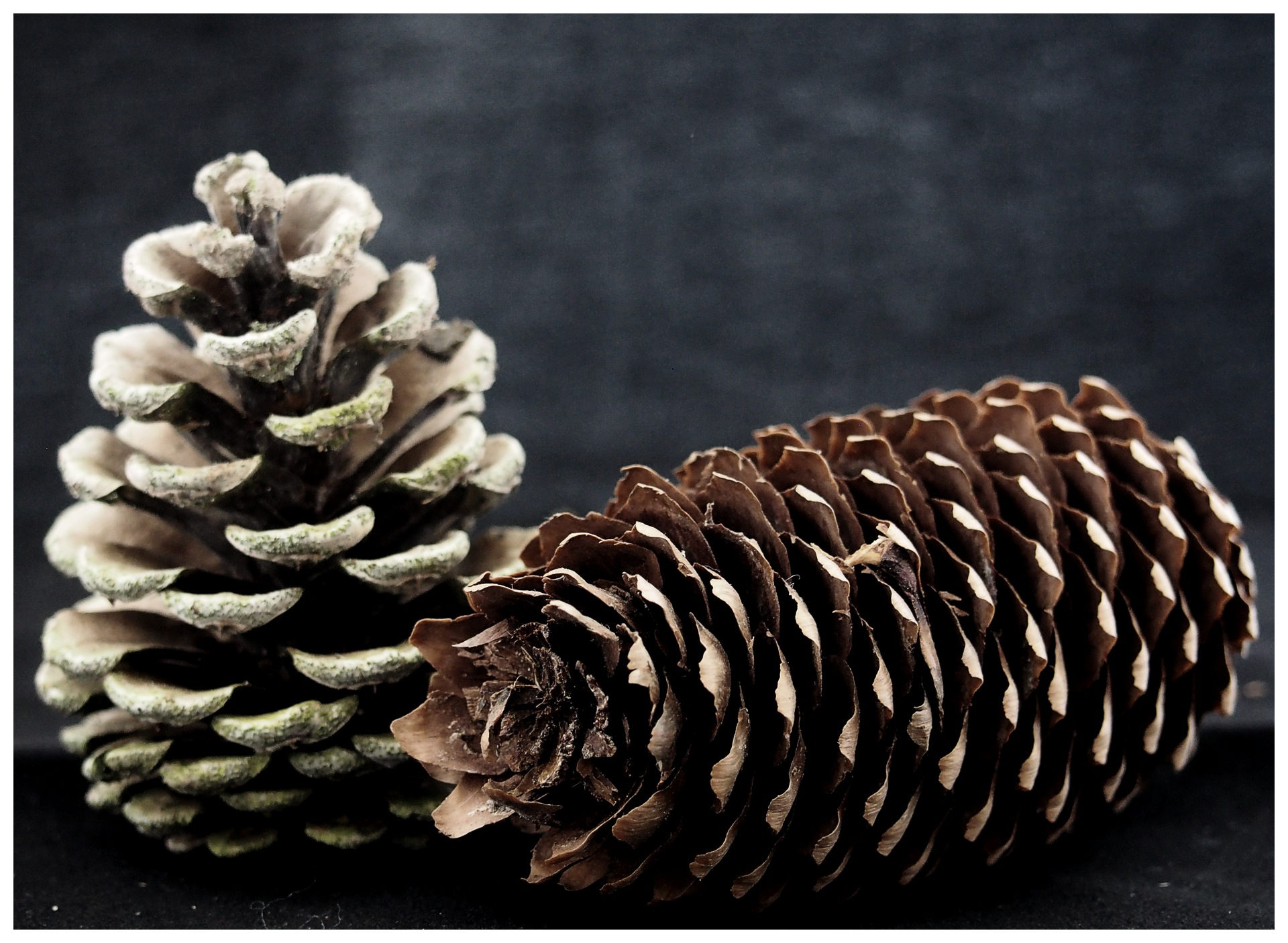 Pine Cones by MorpheusDreaming