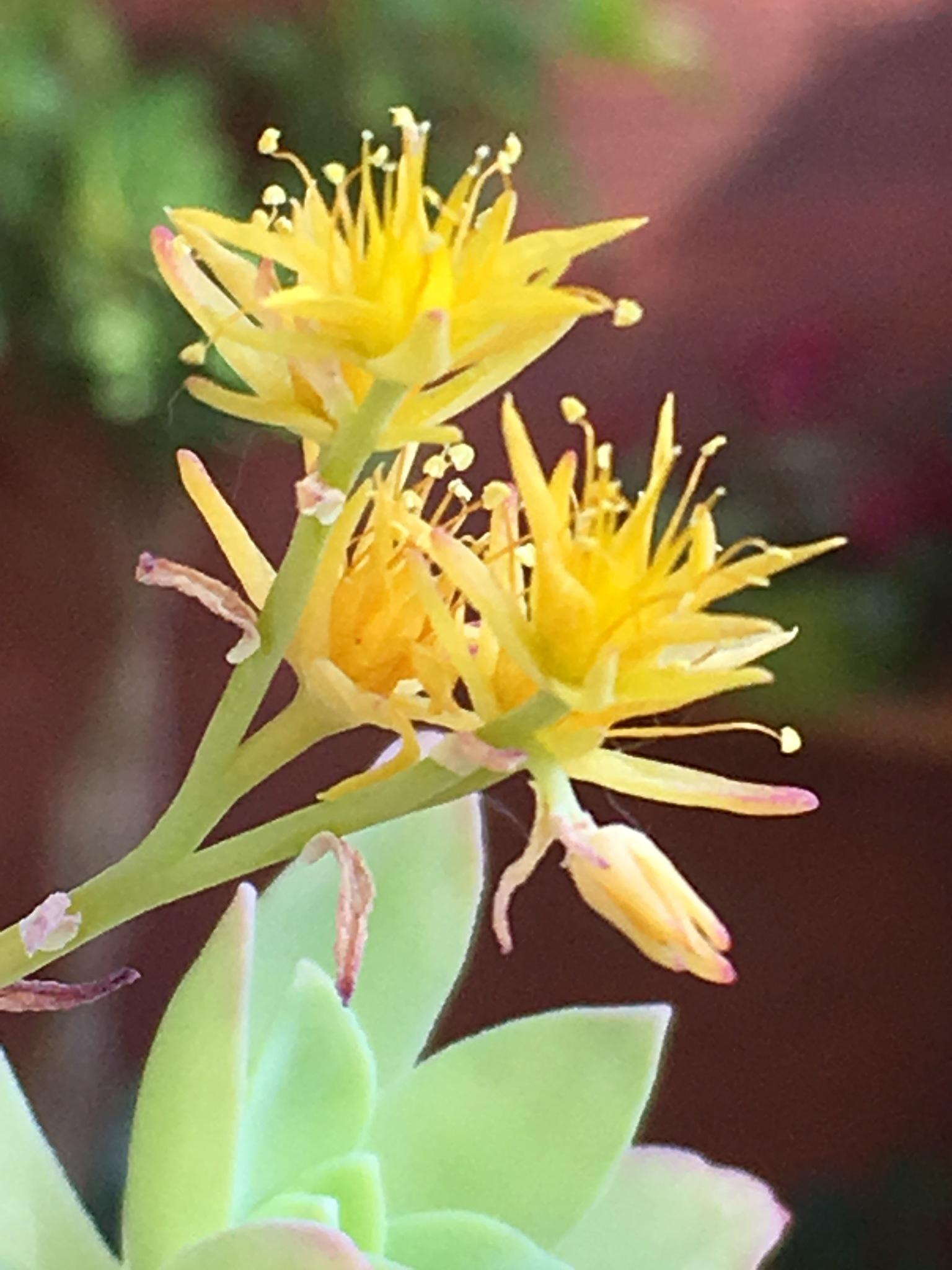 fiori gialli by thelmalory