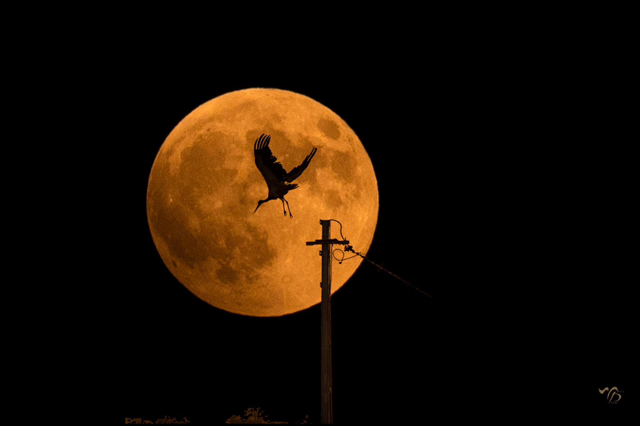Stork and moon... by Dedem
