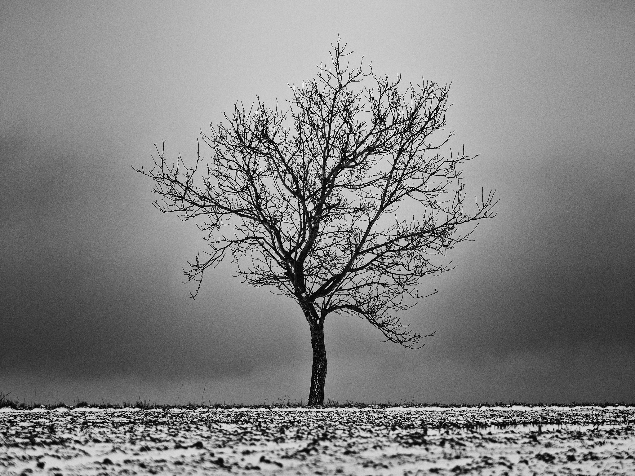 Tree 2 by Lubos Kozler