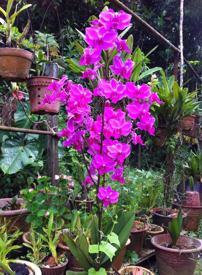 Orchid from our garden by amie