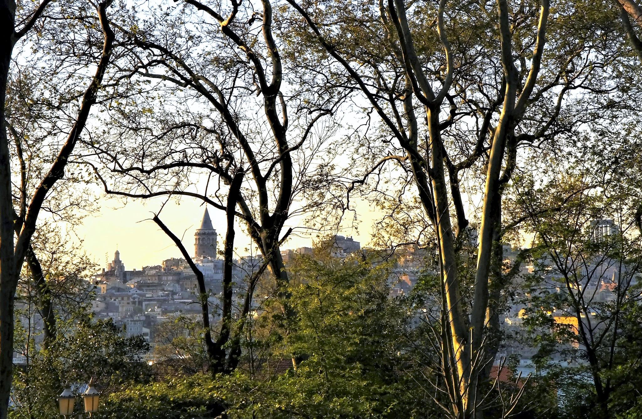 galata tower through the trees by Muhsin Özcan