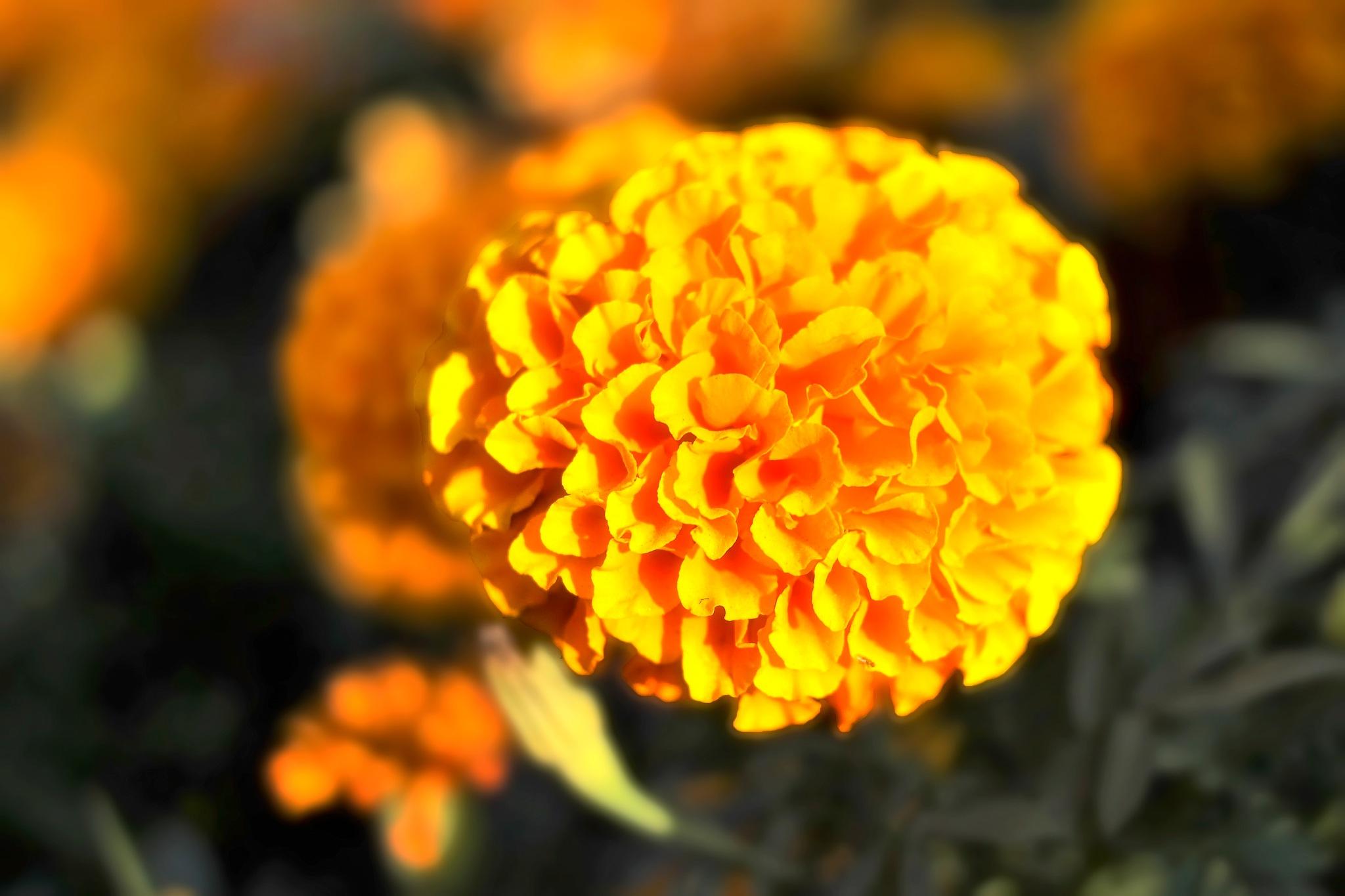 orange- by Muhsin Özcan