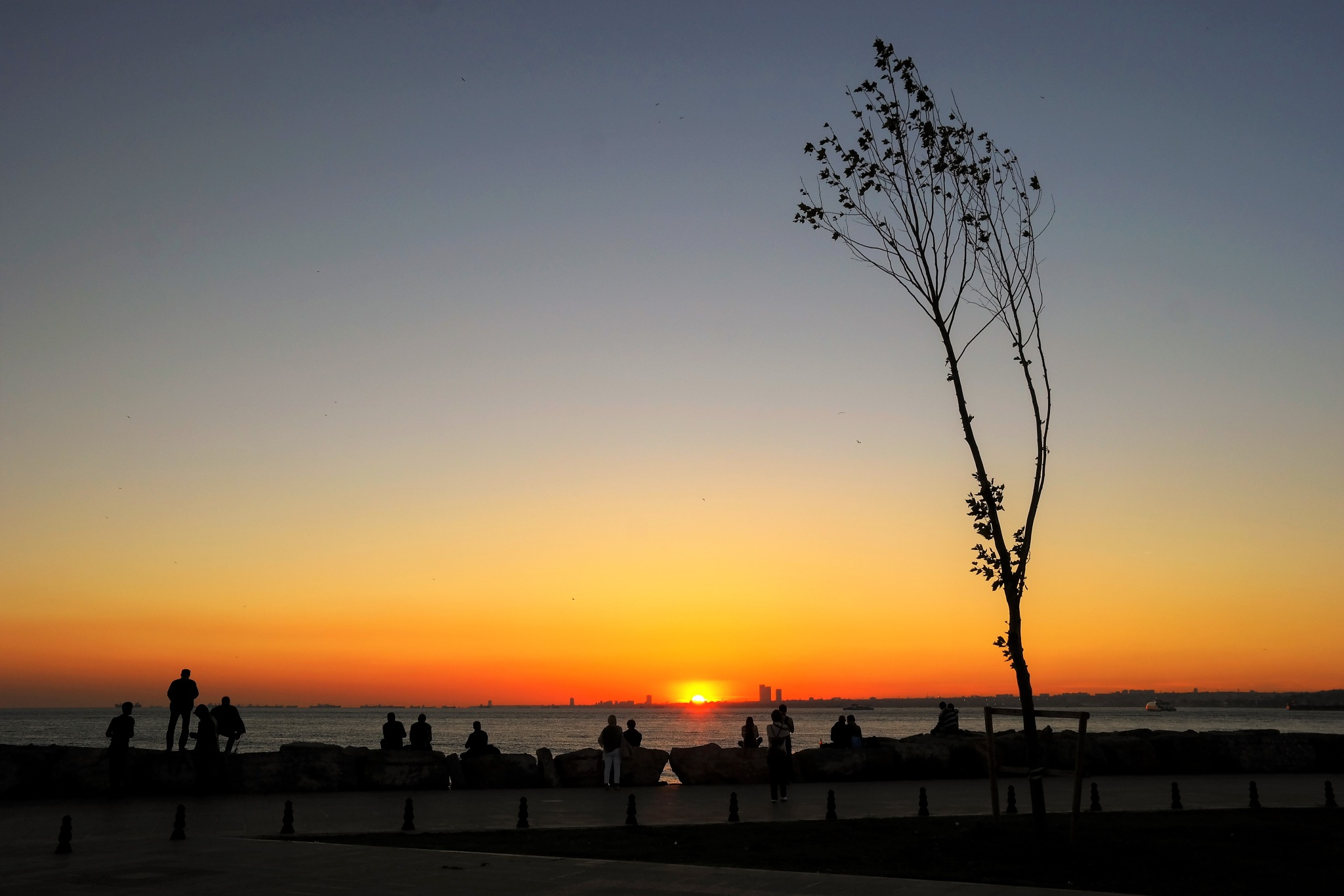 the tree by the sea-2 by Muhsin Özcan
