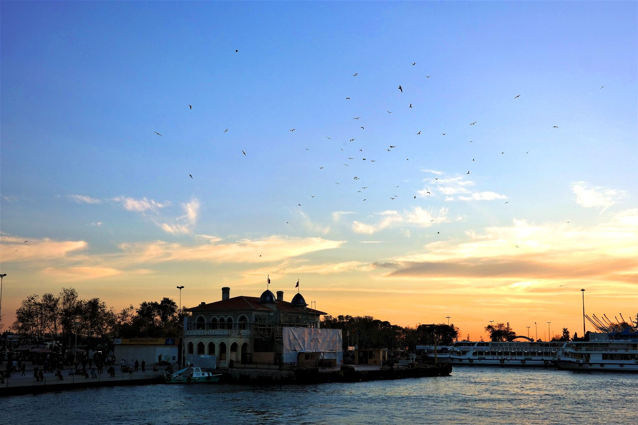 birds over the pier by Muhsin Özcan