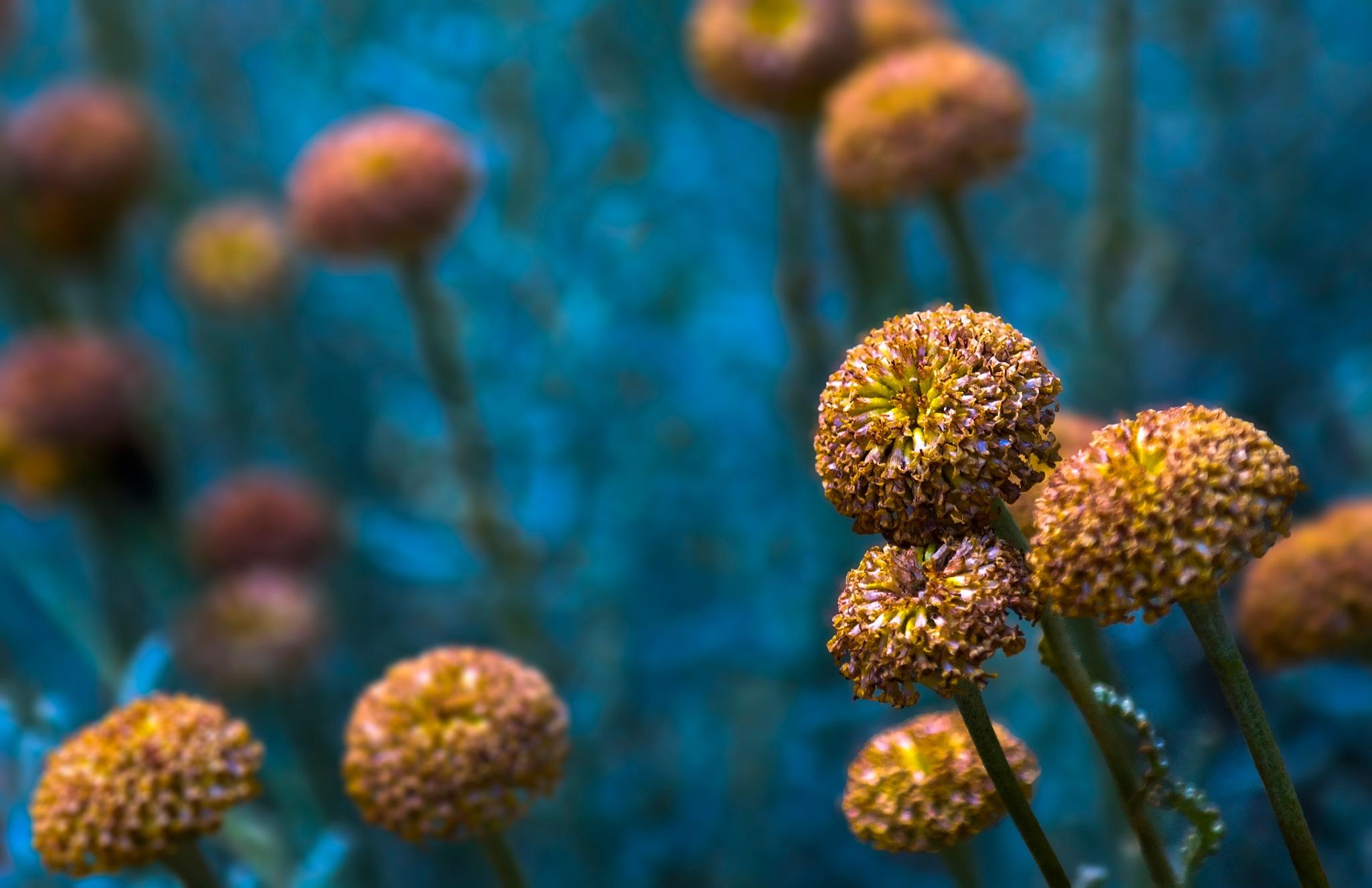 floral by Muhsin Özcan