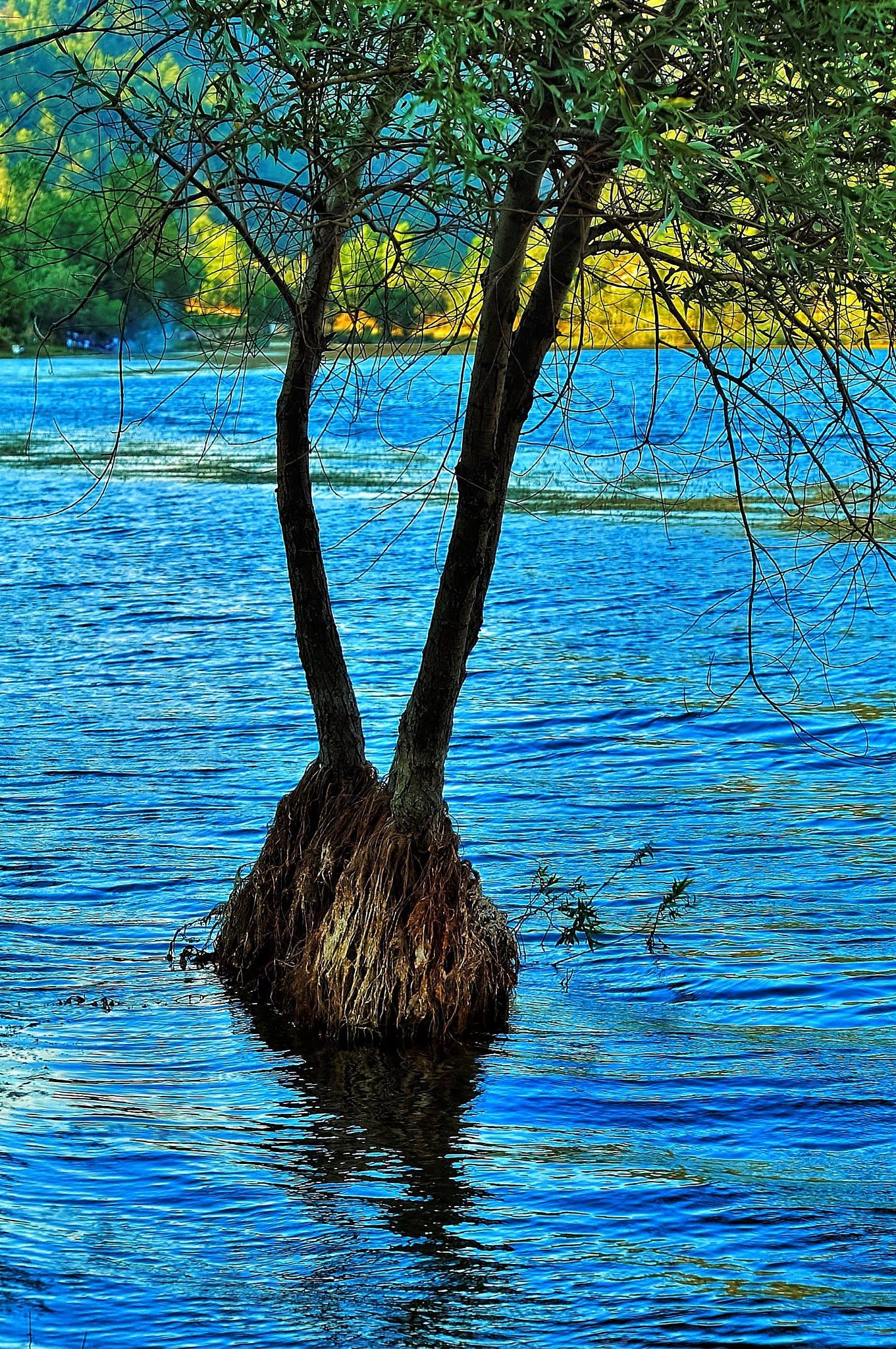 the tree in the lake by Muhsin Özcan