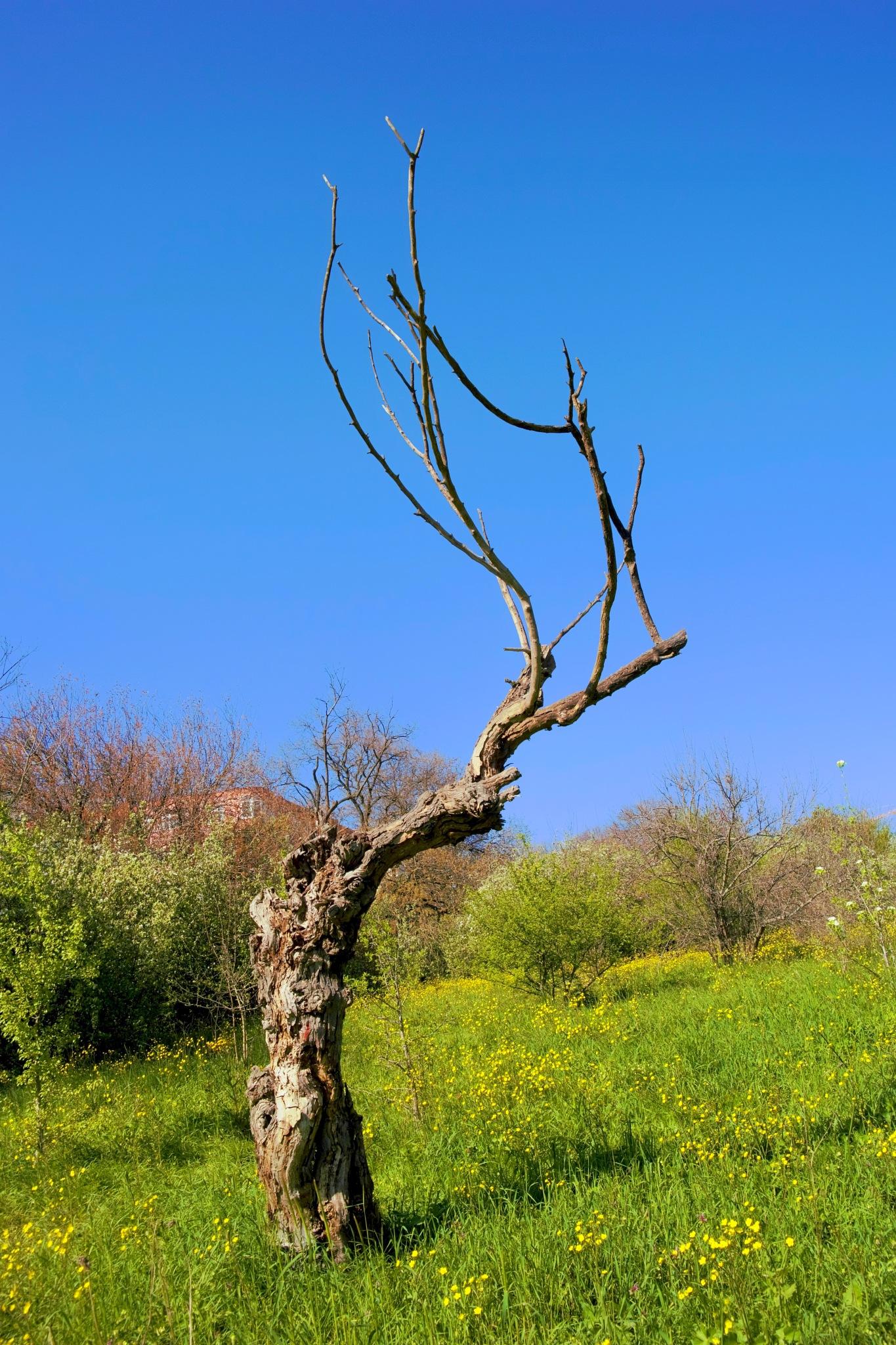 a-lone tree by Muhsin Özcan