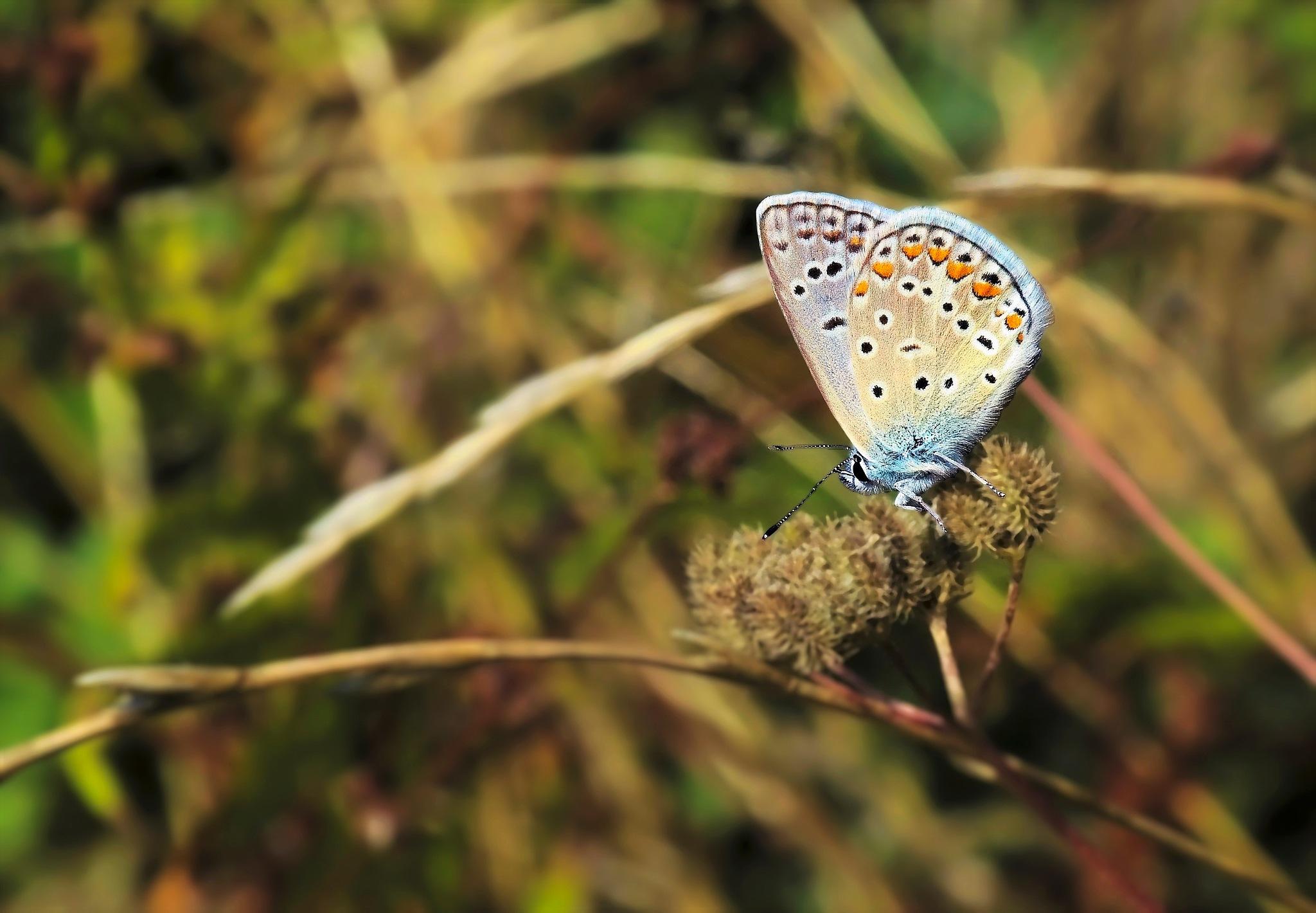 butterfly- by Muhsin Özcan