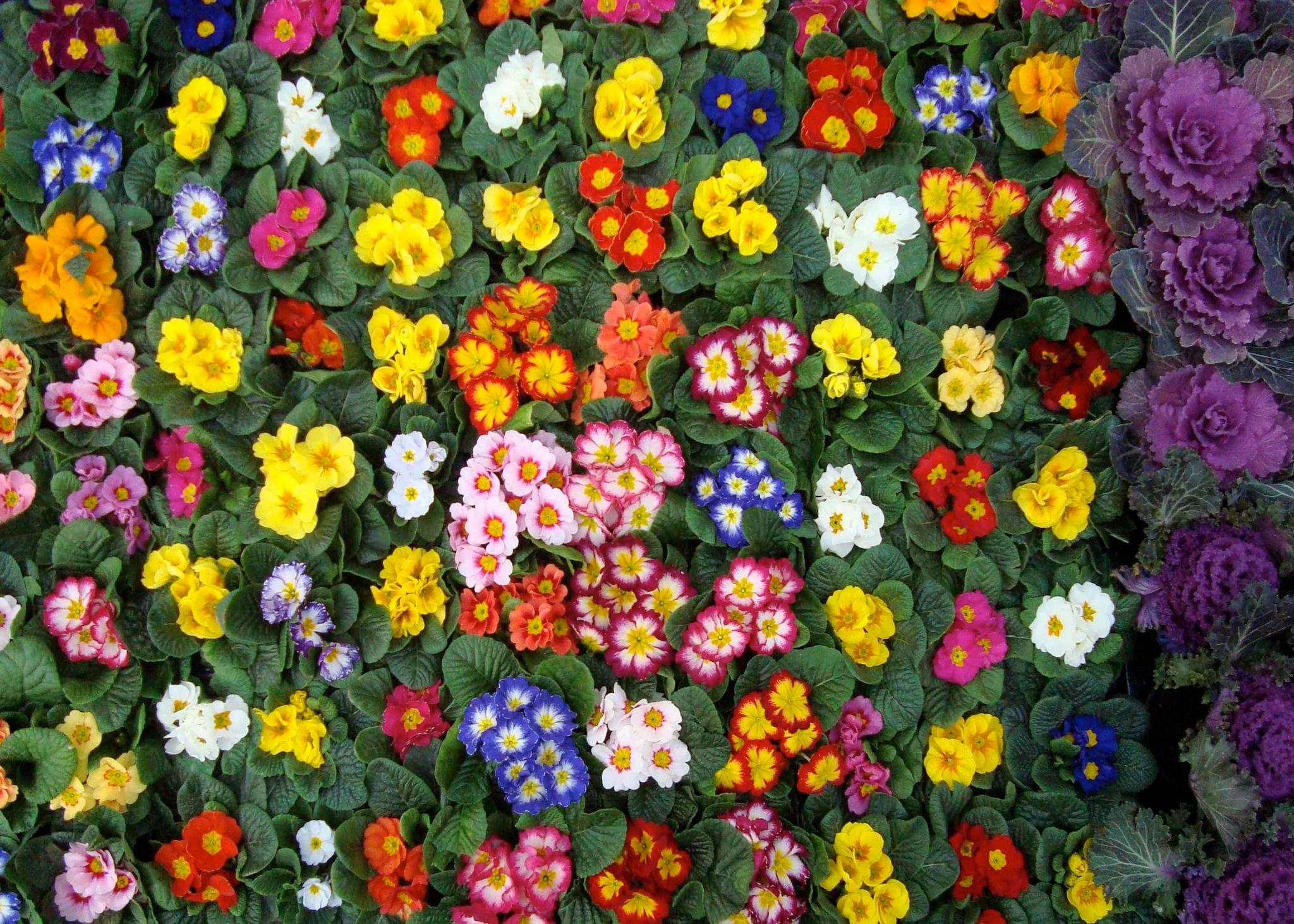 Flower Market, Shoreditch by kfboland125
