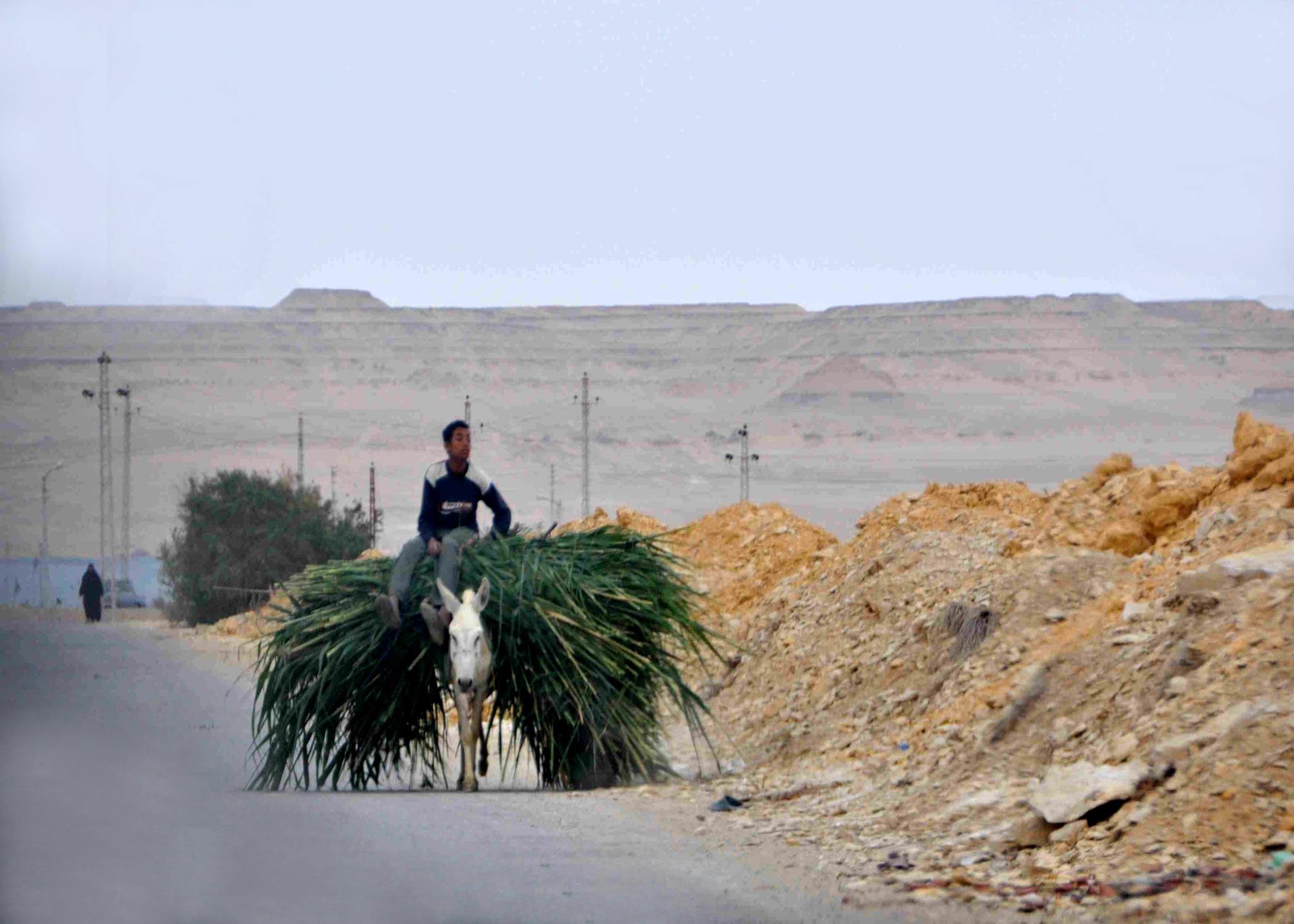 Fayoum, Egypt by kfboland125