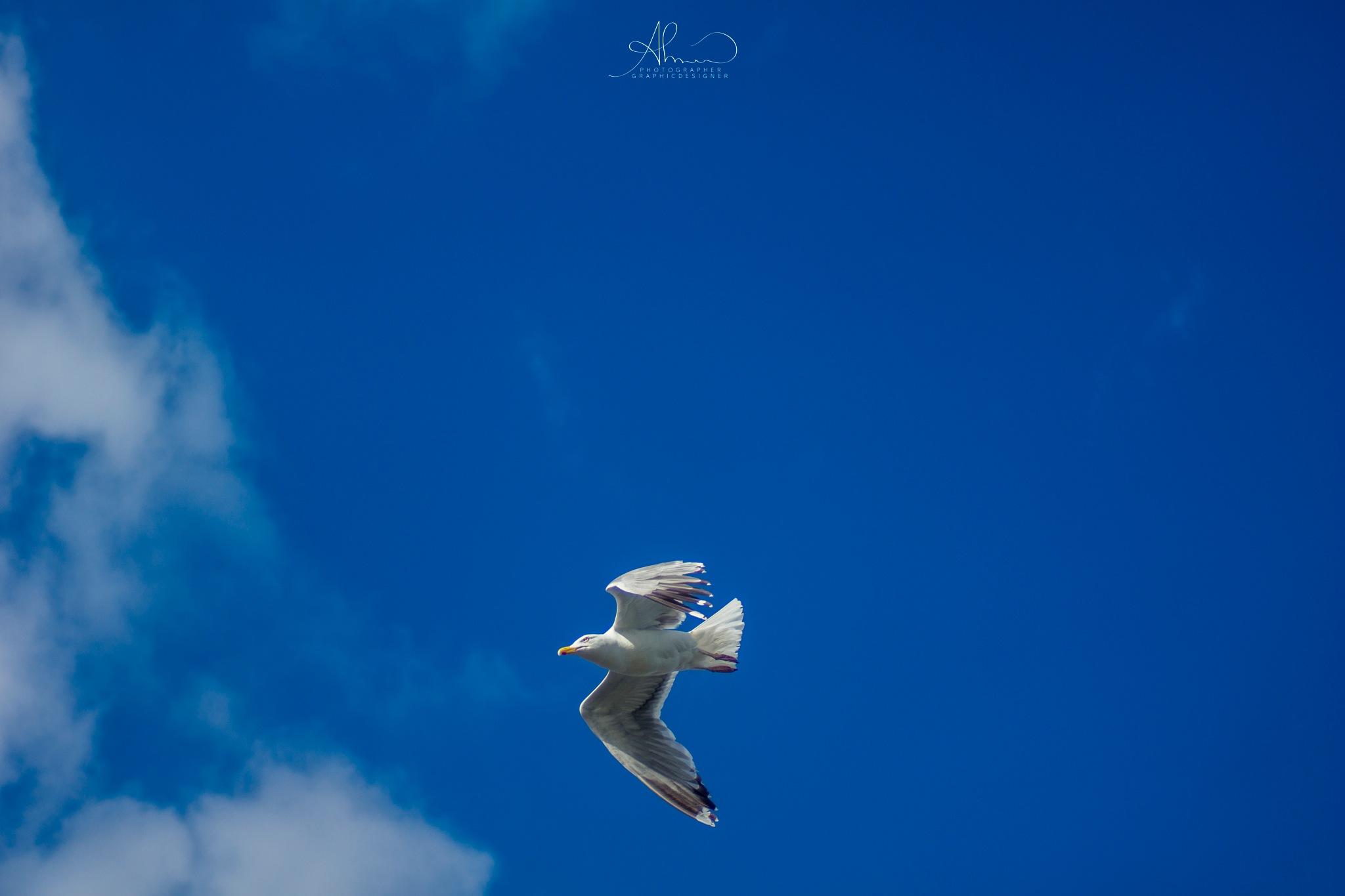 Fly  by AhmadAlsaad