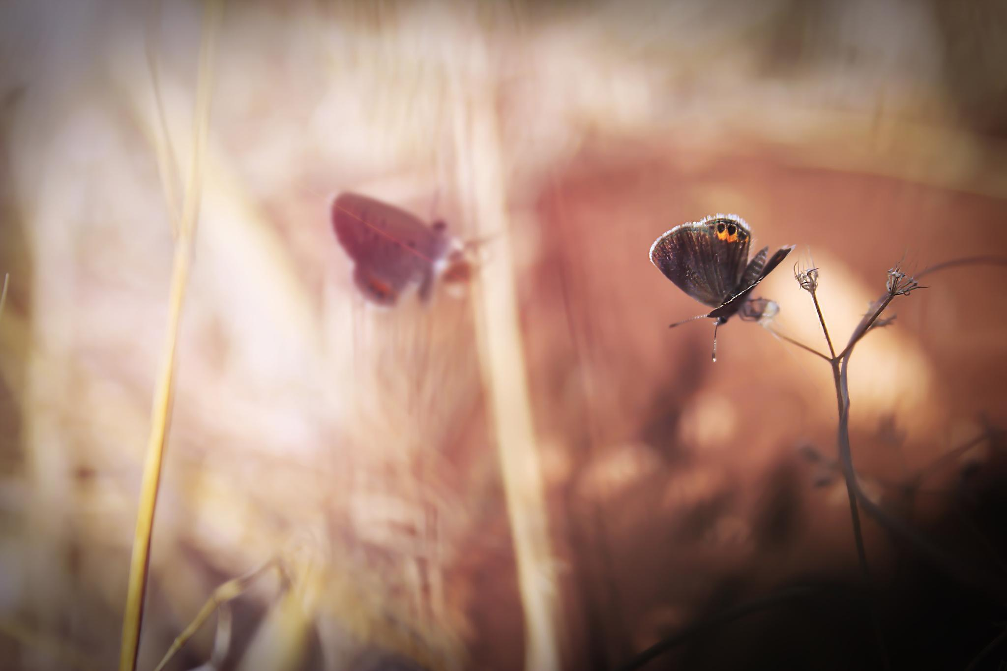 Photo in Nature #sensation #butterfly #nature #sunset #soul