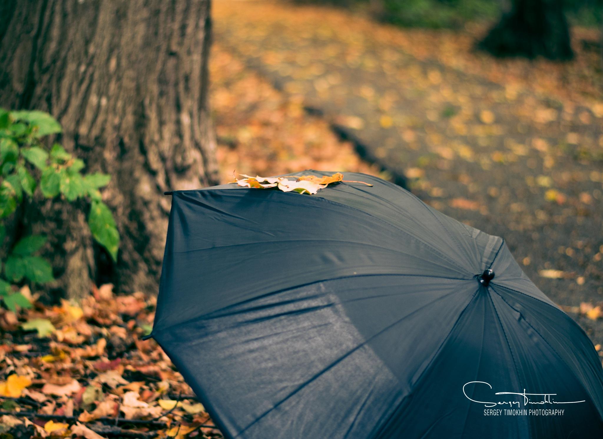 Fall by Sergey Timokhin