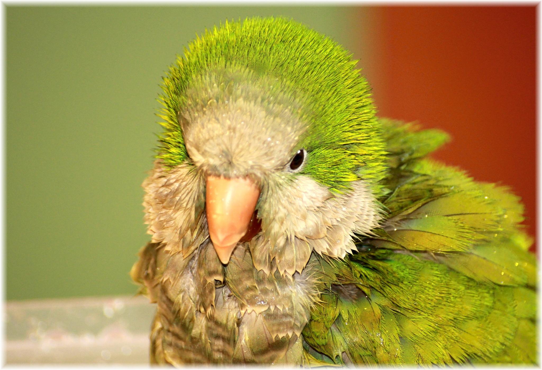 Papoušek by nejfoto