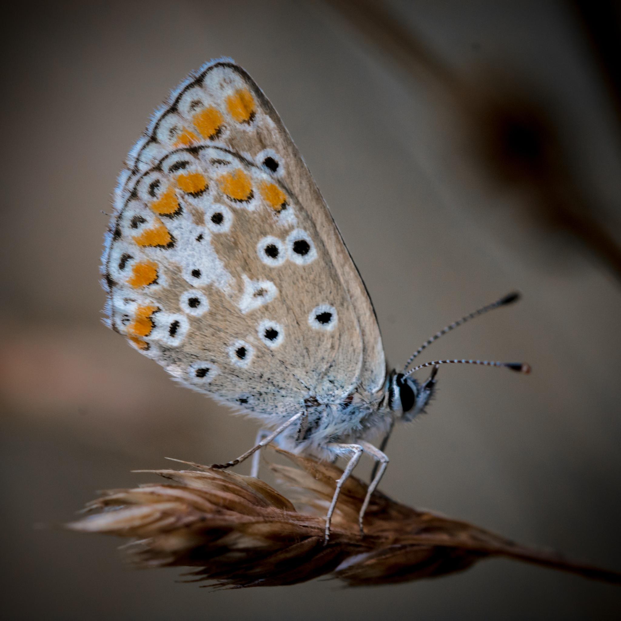 Butterfly by ThomasBeuker