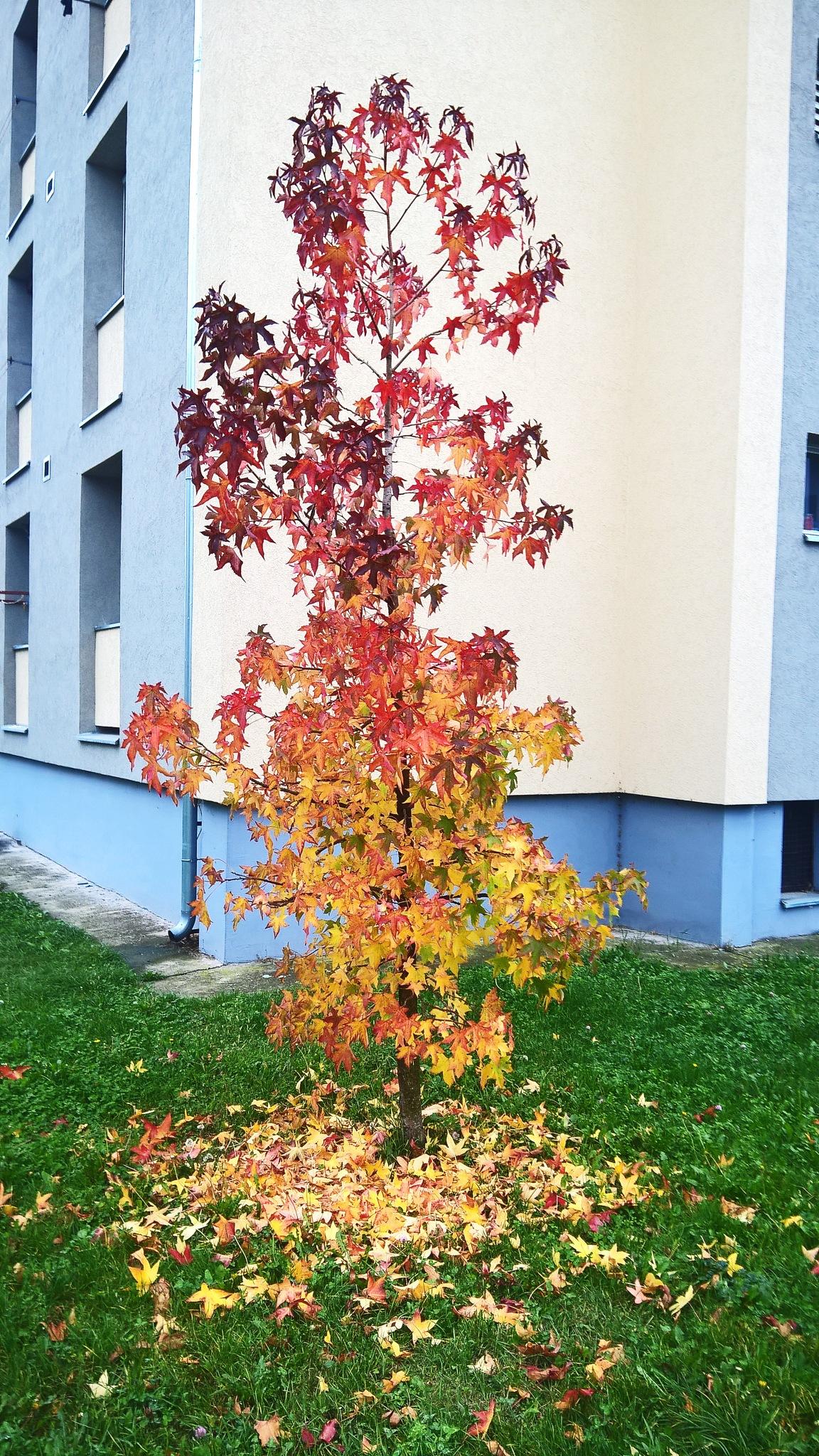 Gradient Tree by Preacher