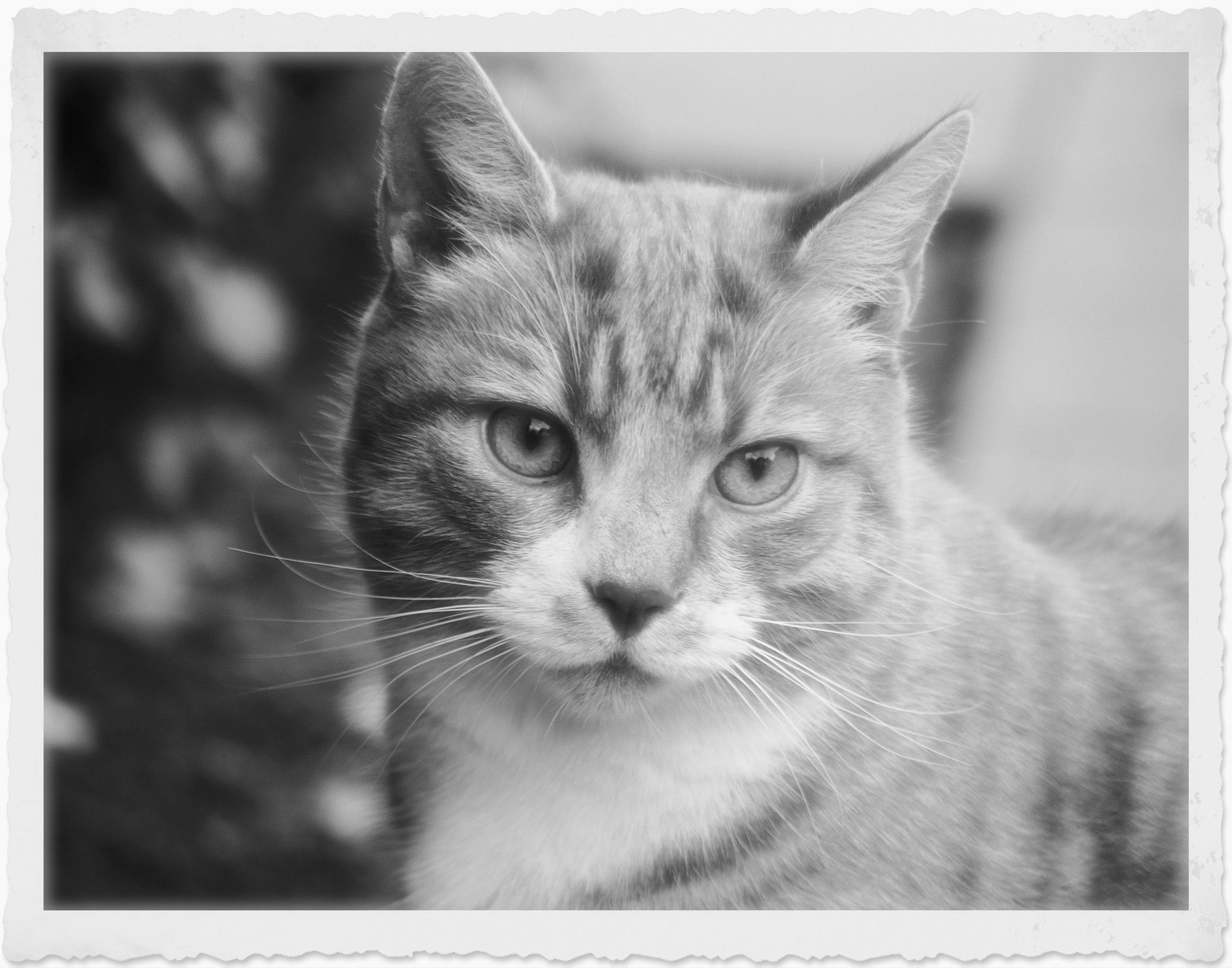 Cat by John Friis Mortensen