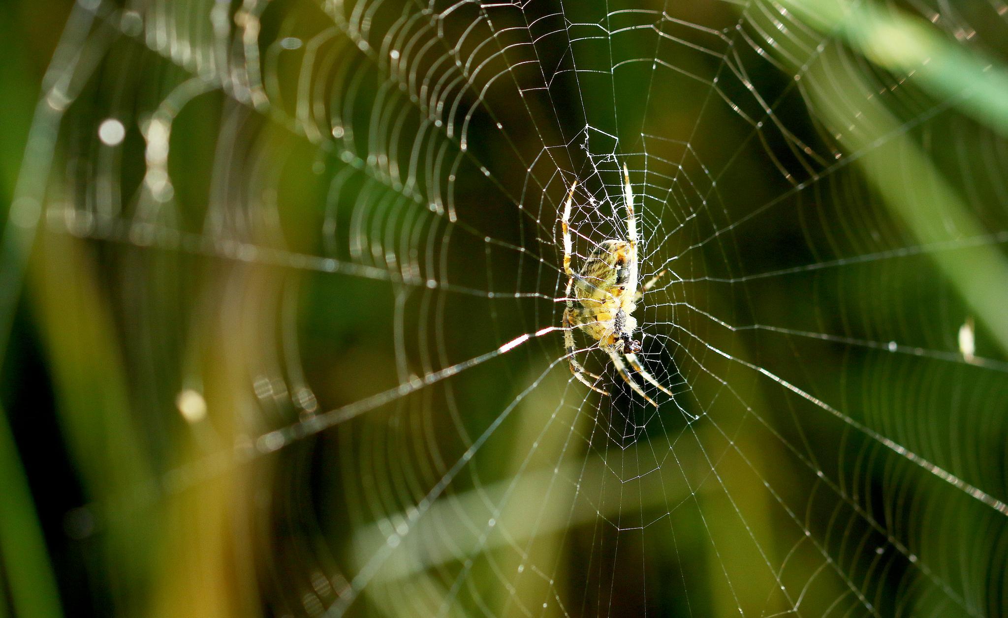 a spider's web by John Friis Mortensen
