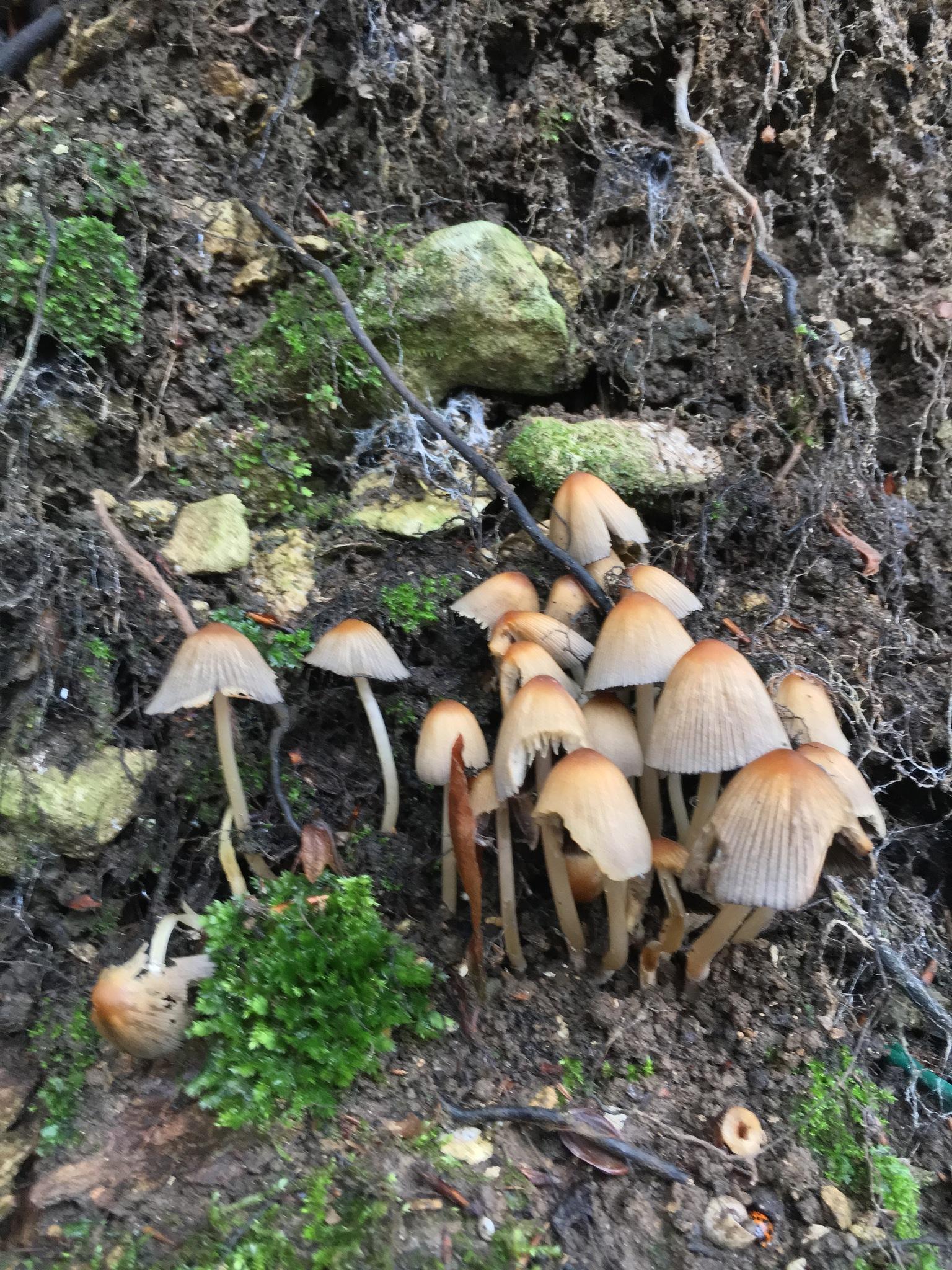 Mushrooooooooom by Karrenteuhd'eux