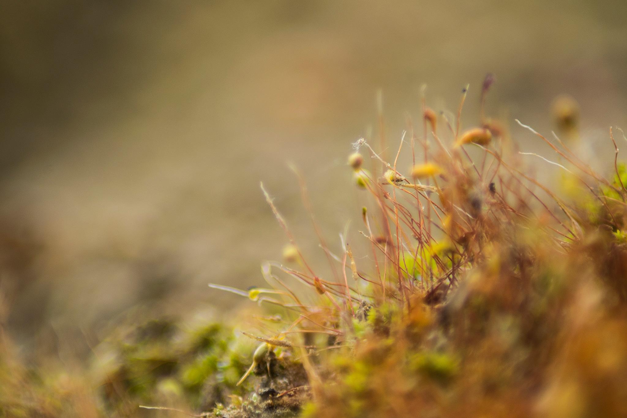 Moss by Gyula Tóth