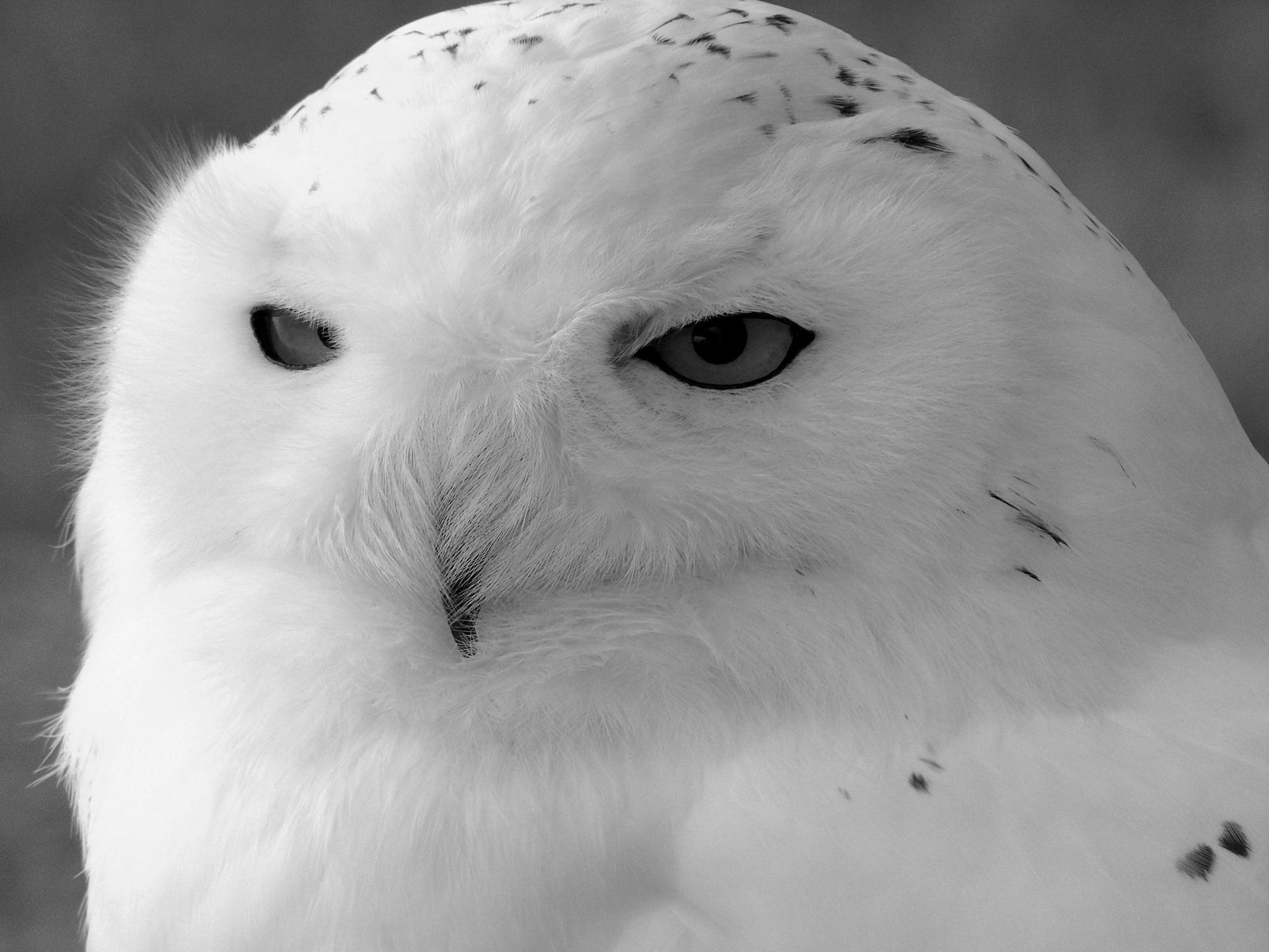 Owl by Dean Bryant