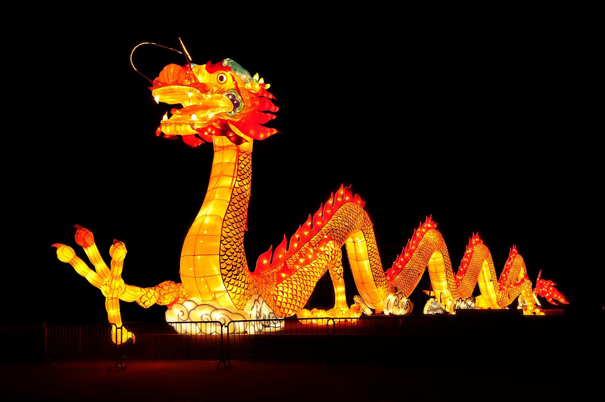 Dragon by Louis Frielink
